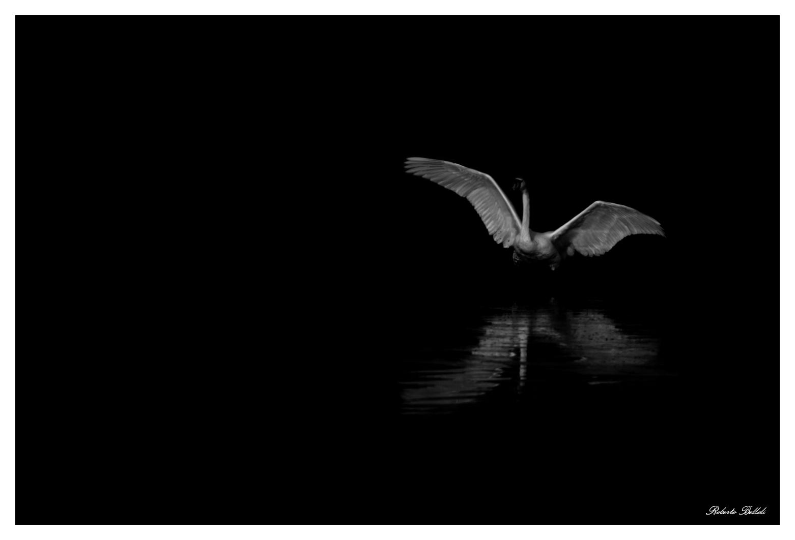 Angel of the Night...