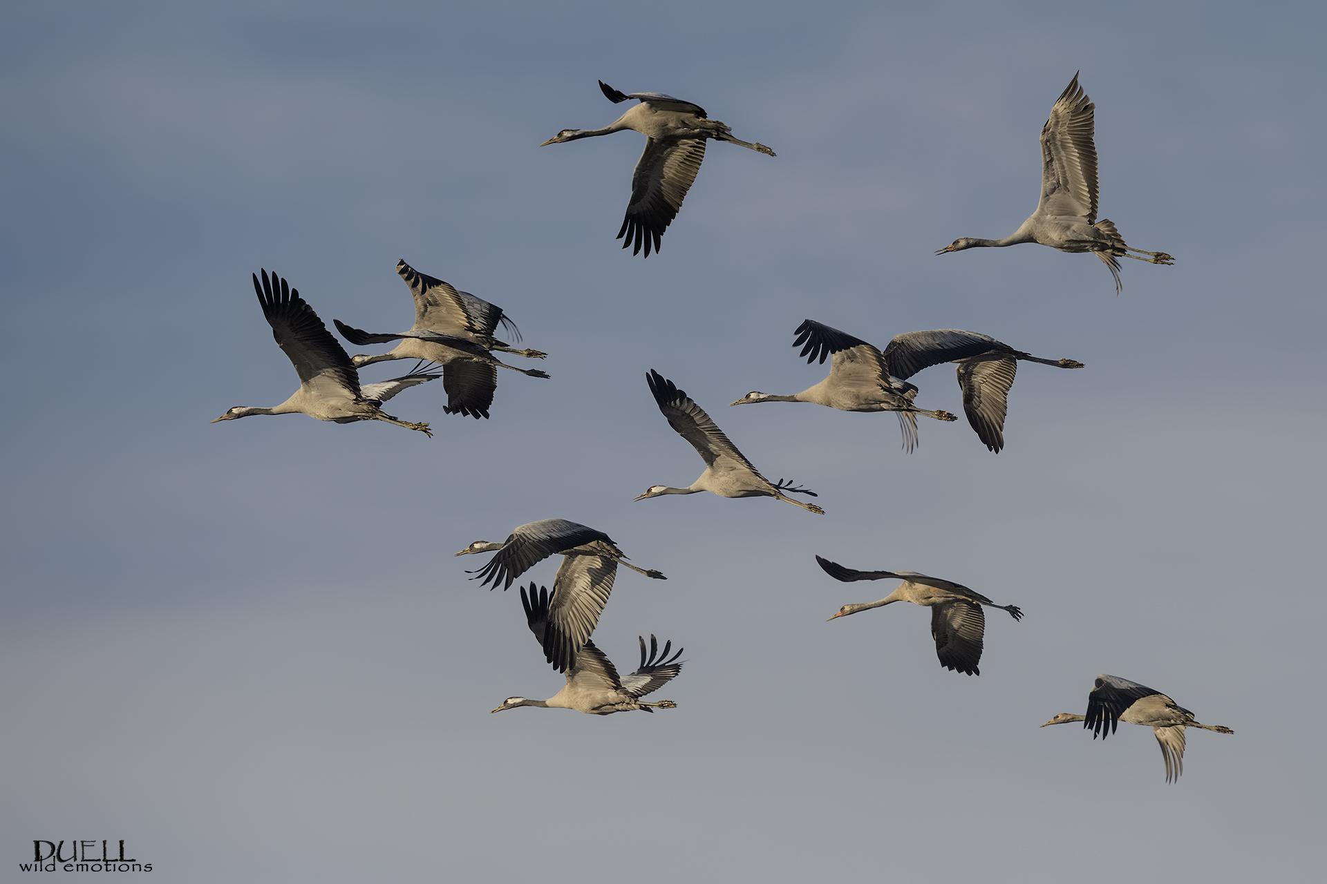 come the cranes !!...