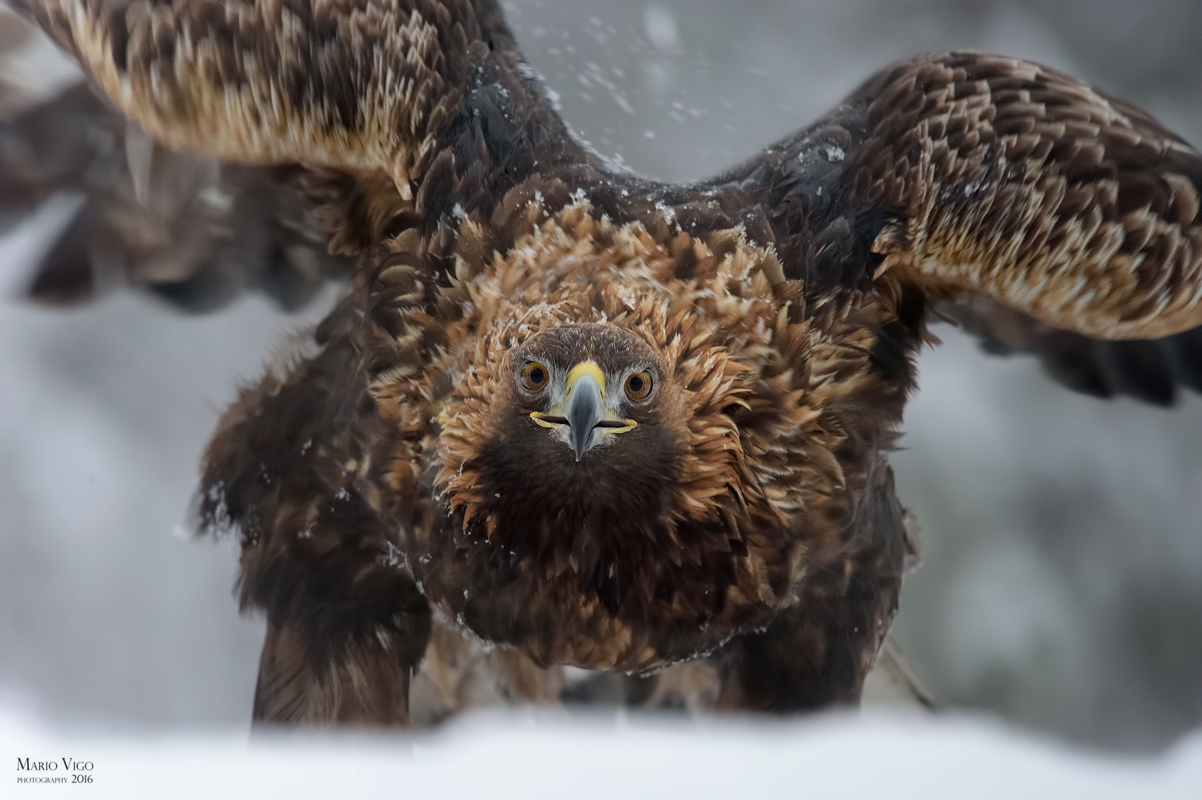 The look of the eagle...