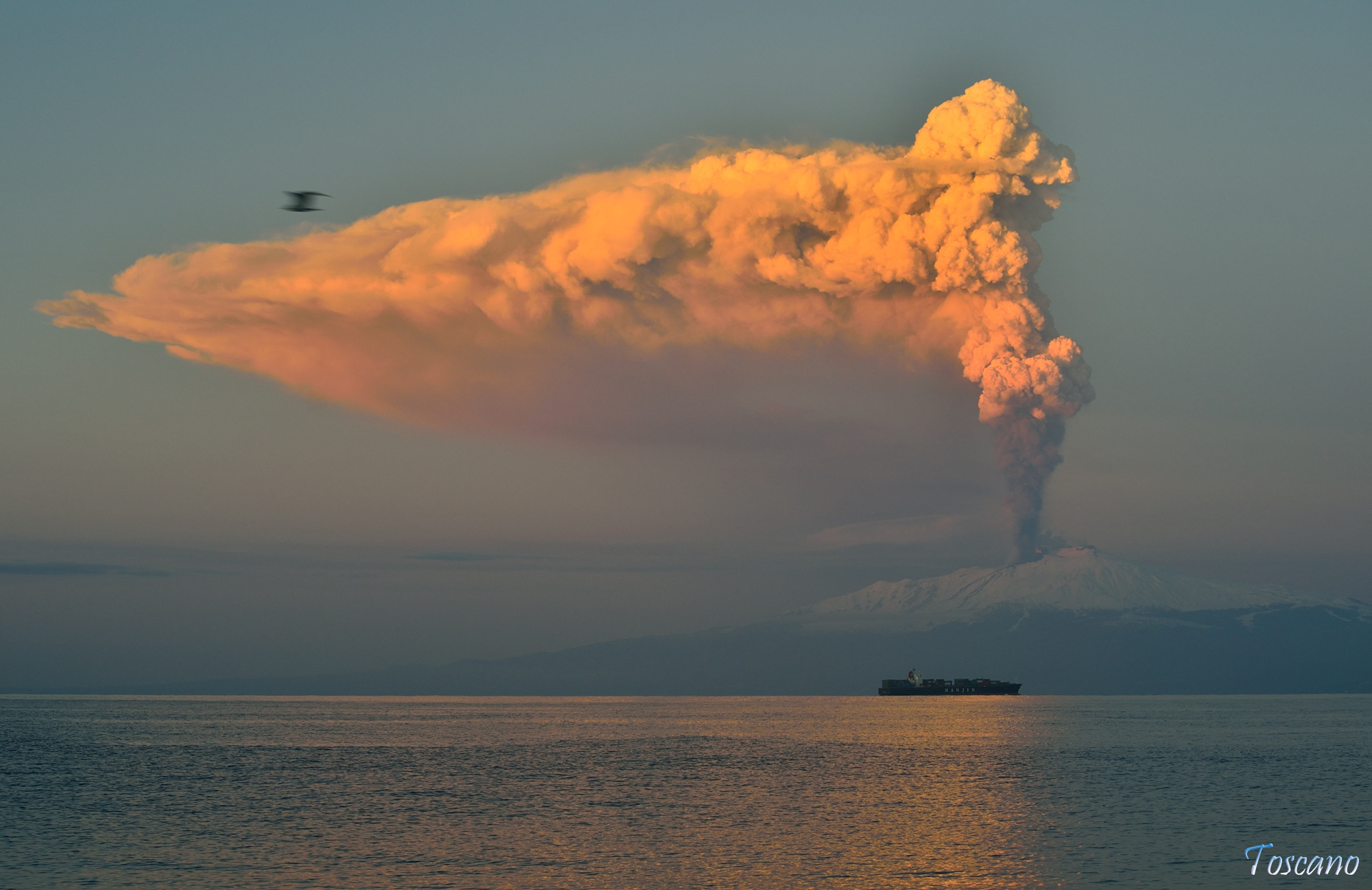 The Seagull and the eruption...