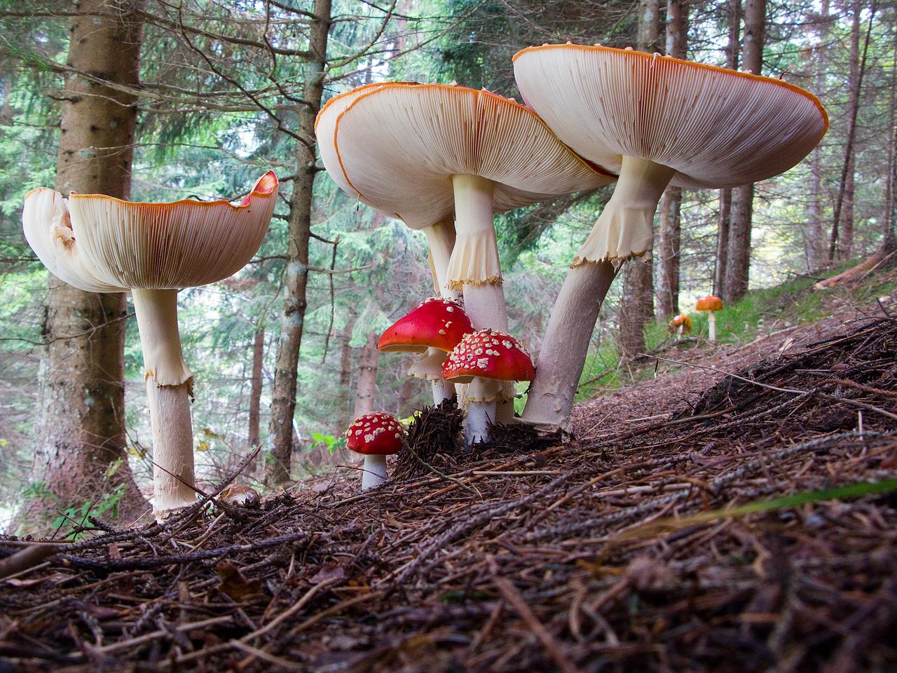 Umbrellas in the undergrowth....