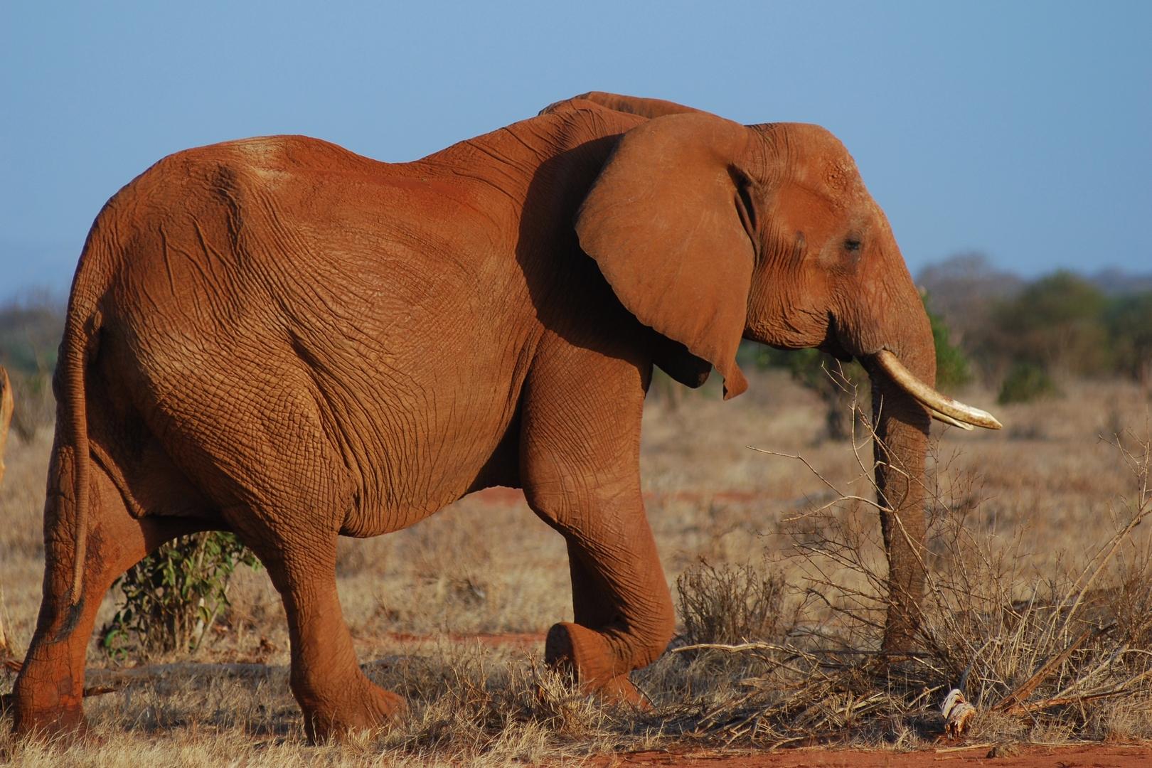 elephant n ° 2...