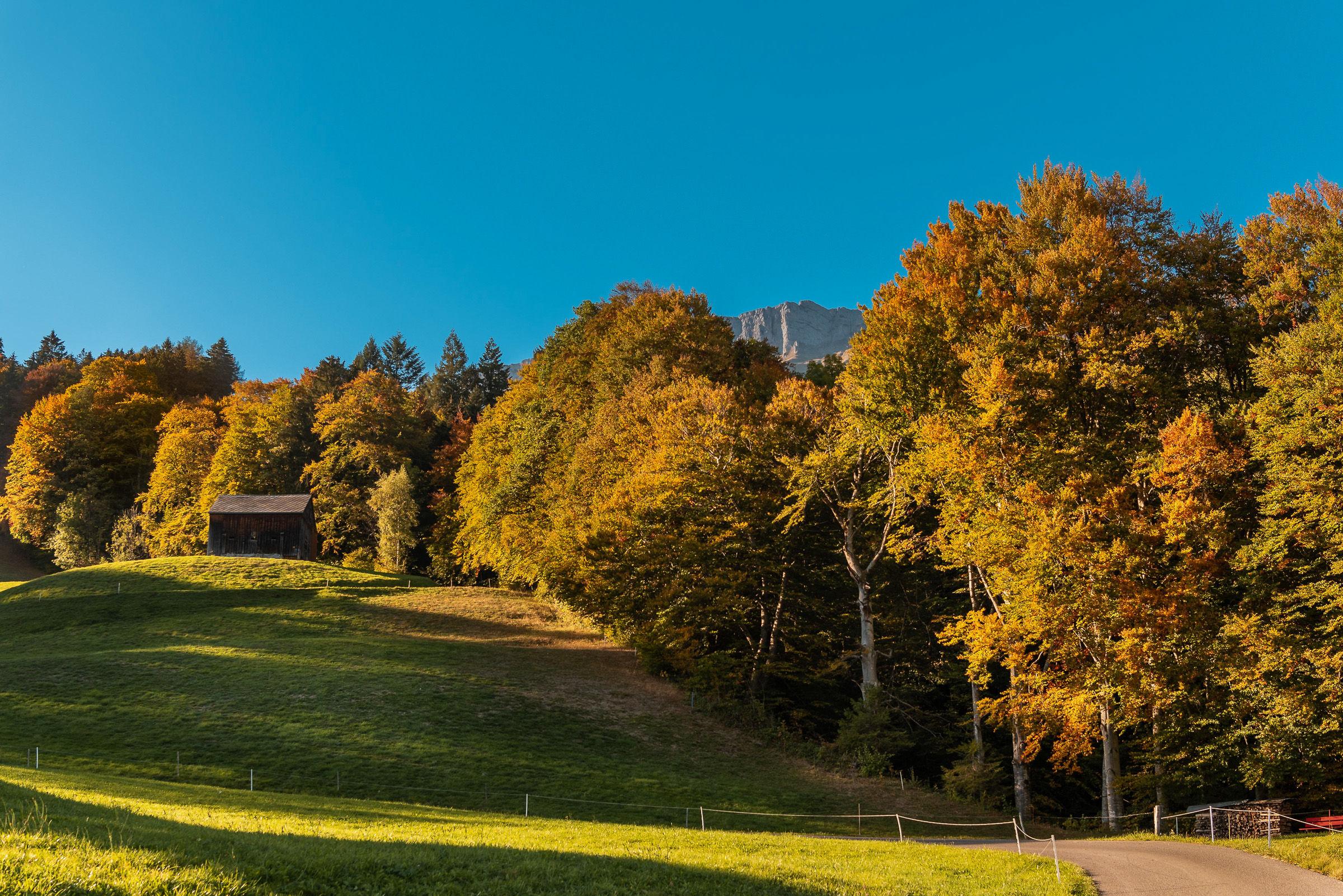 Pascoli svizzeri in autunno...