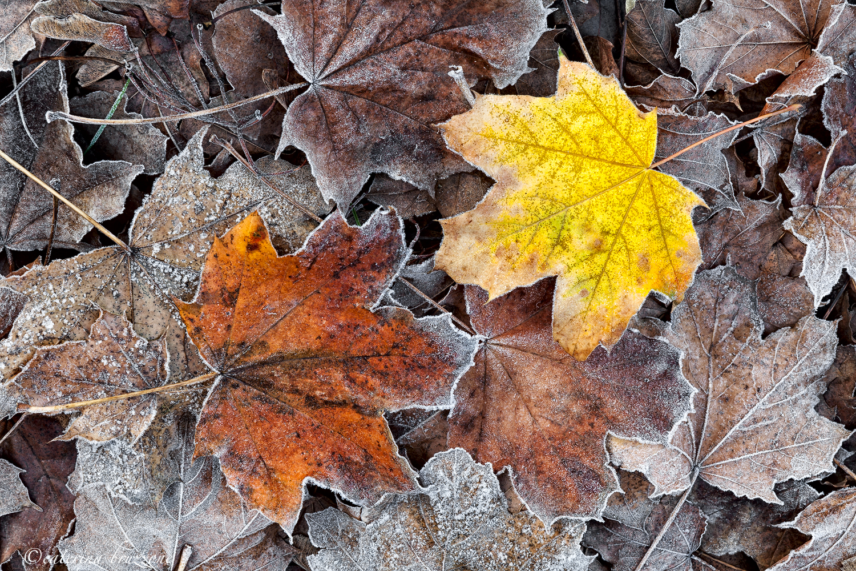 Details of autumn...