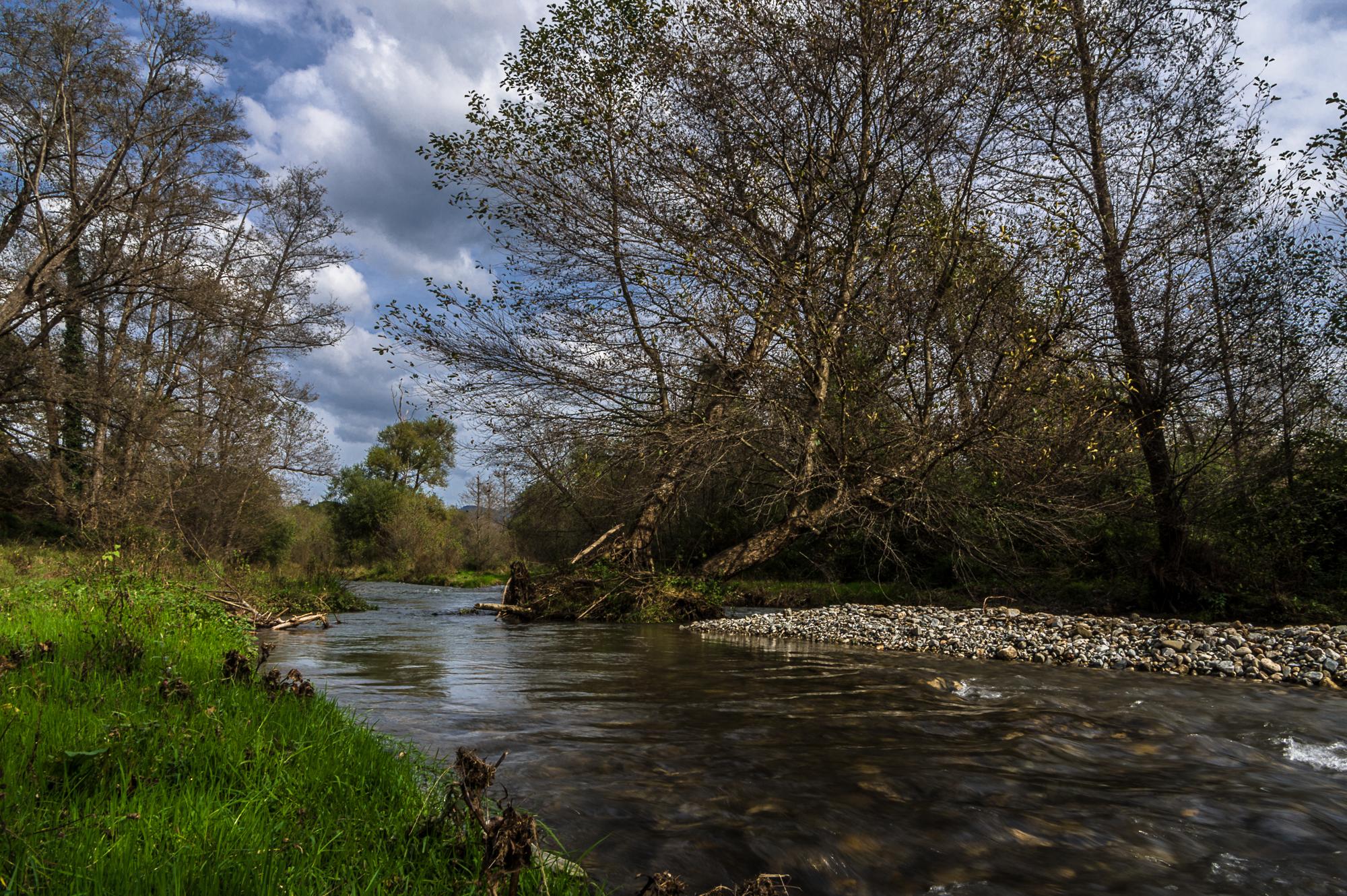 River Shad 2...