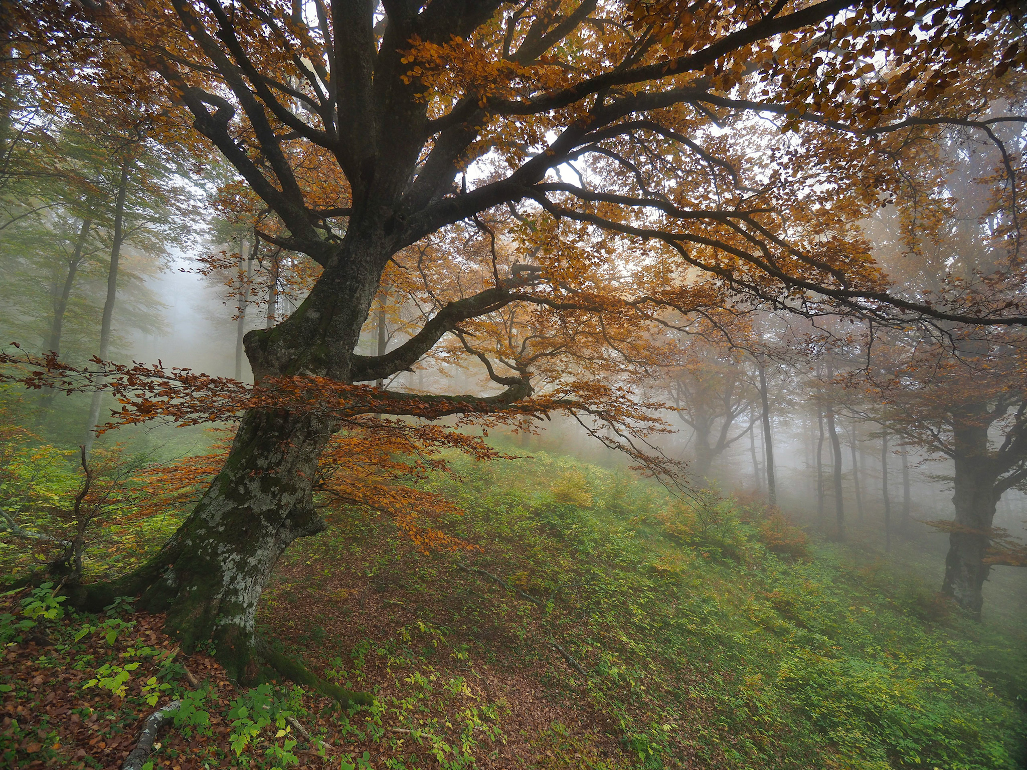 Divine Forest ...
