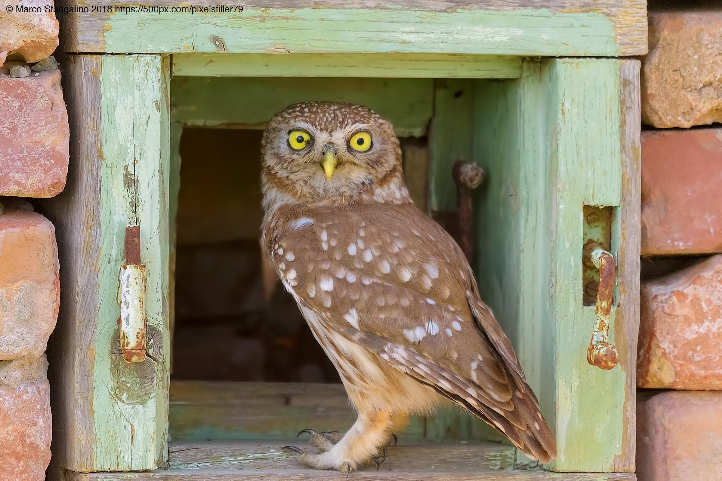 Little OWL Window...