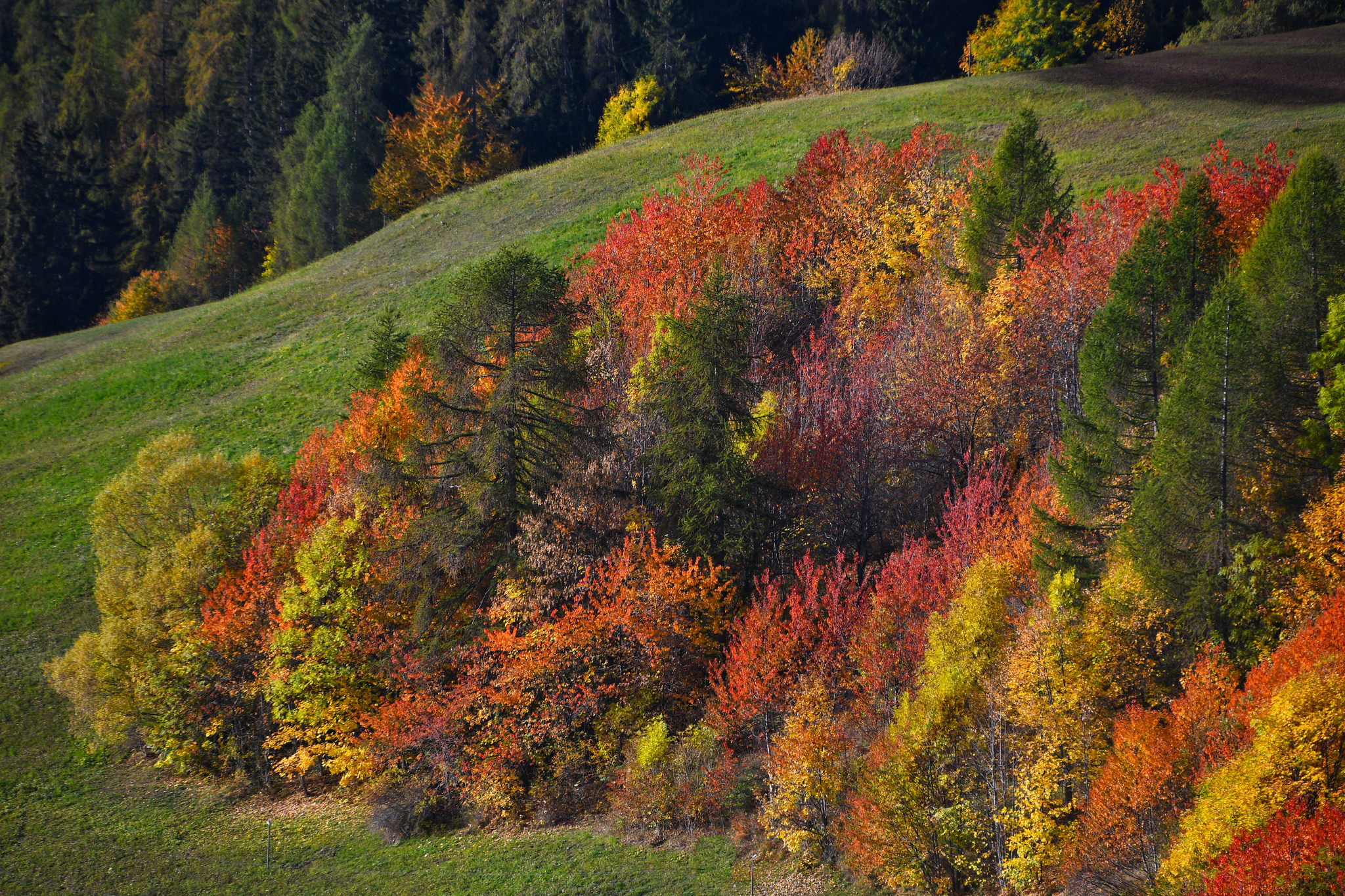 The colors of autumn...
