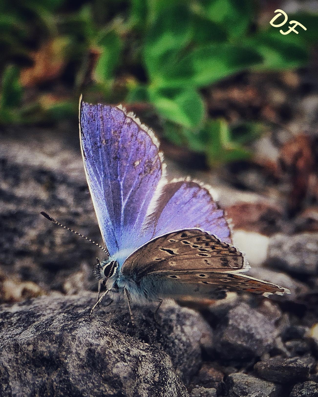 Violet Shadow...
