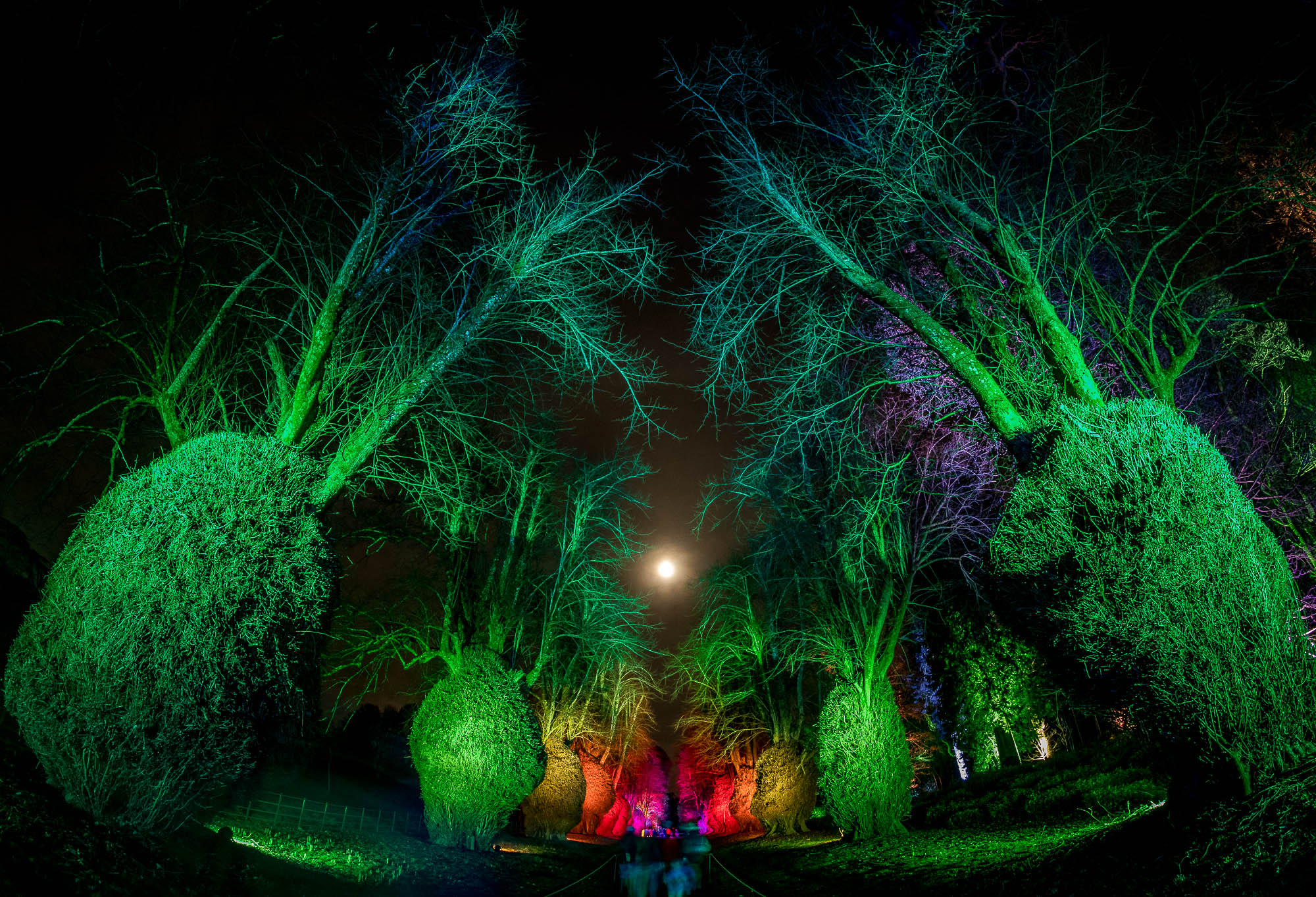 Christmas Lights At Kingston Lacy 2018...