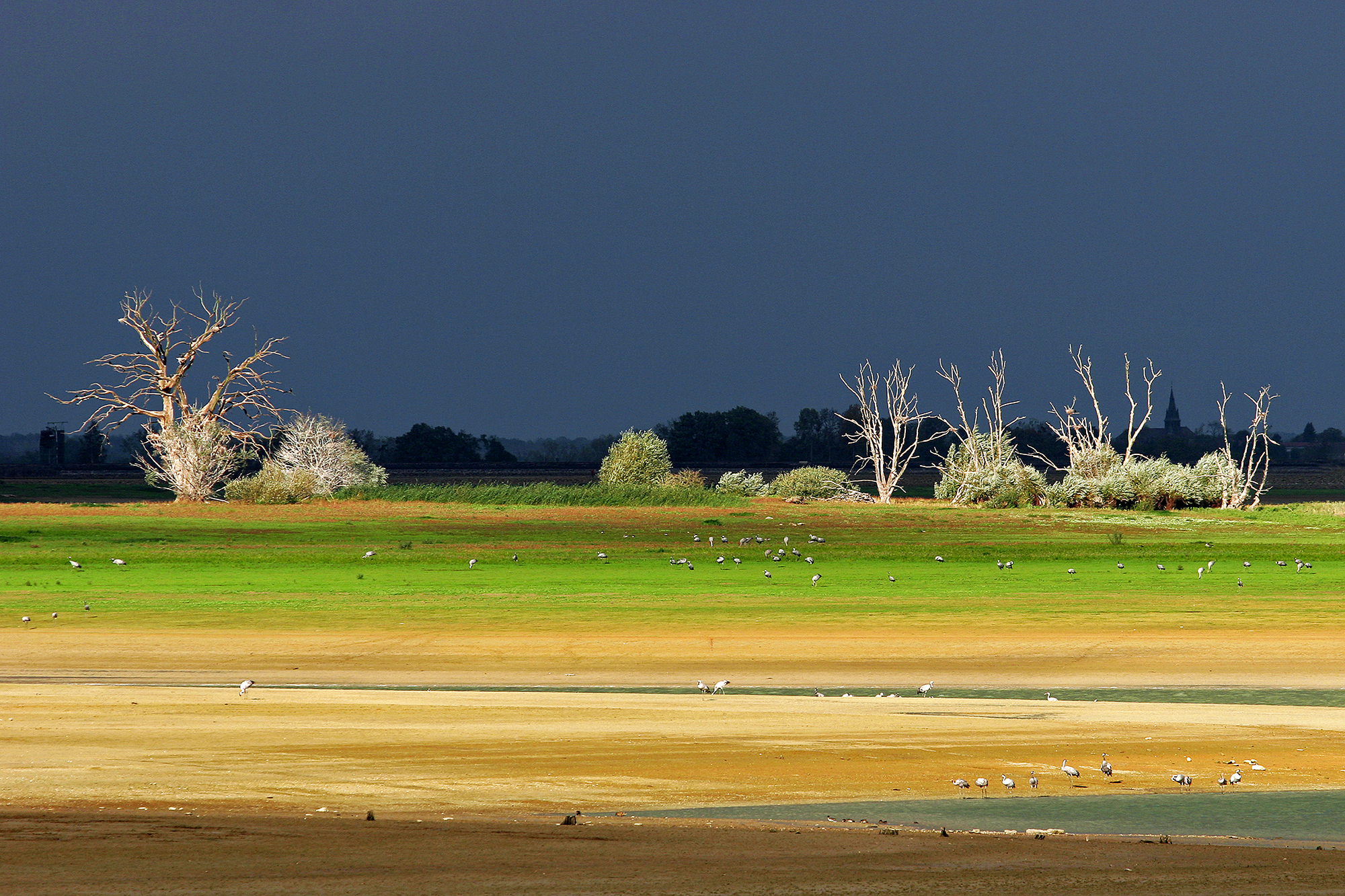 Lac du Der (France) with cranes...