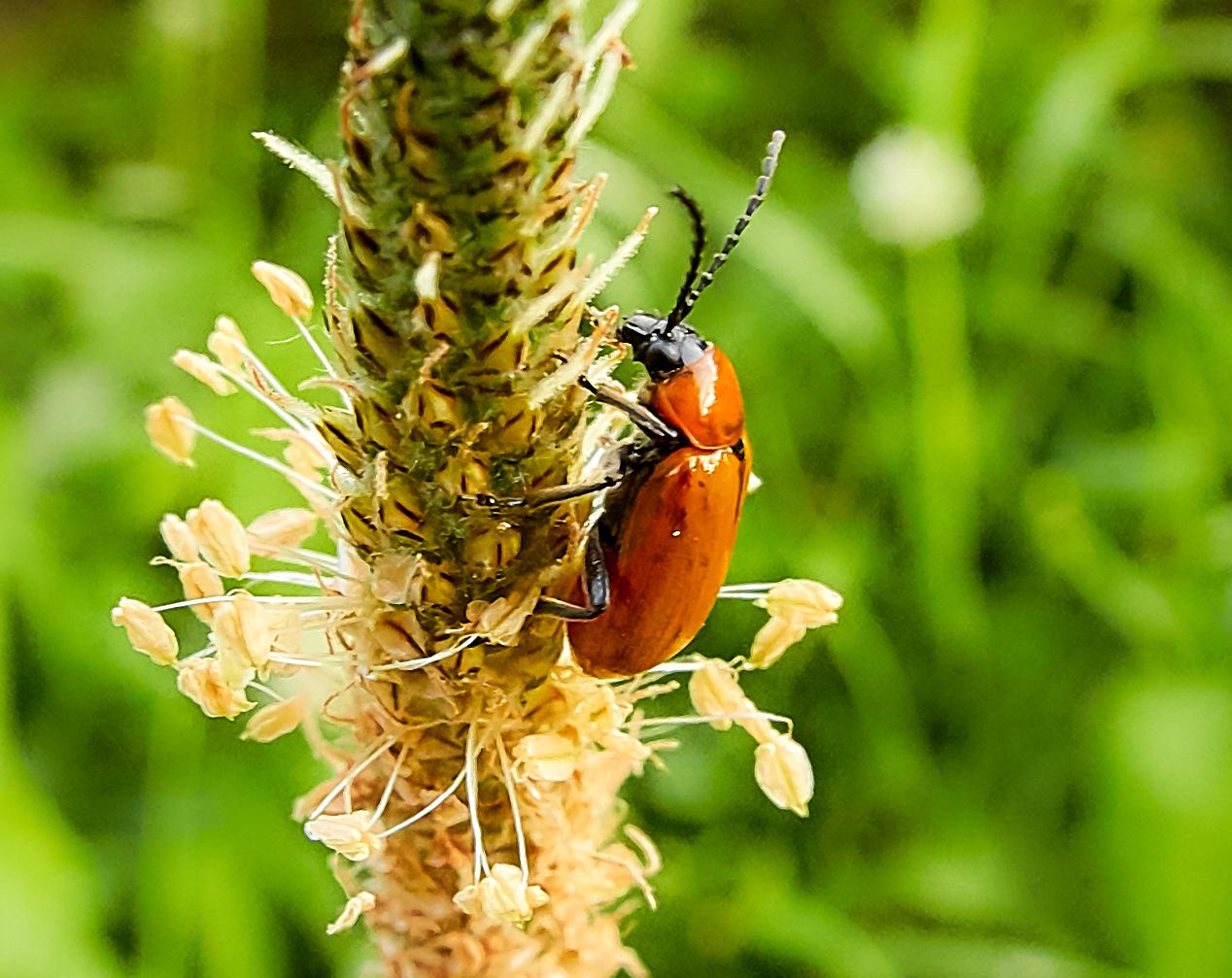 Garden Bugs...
