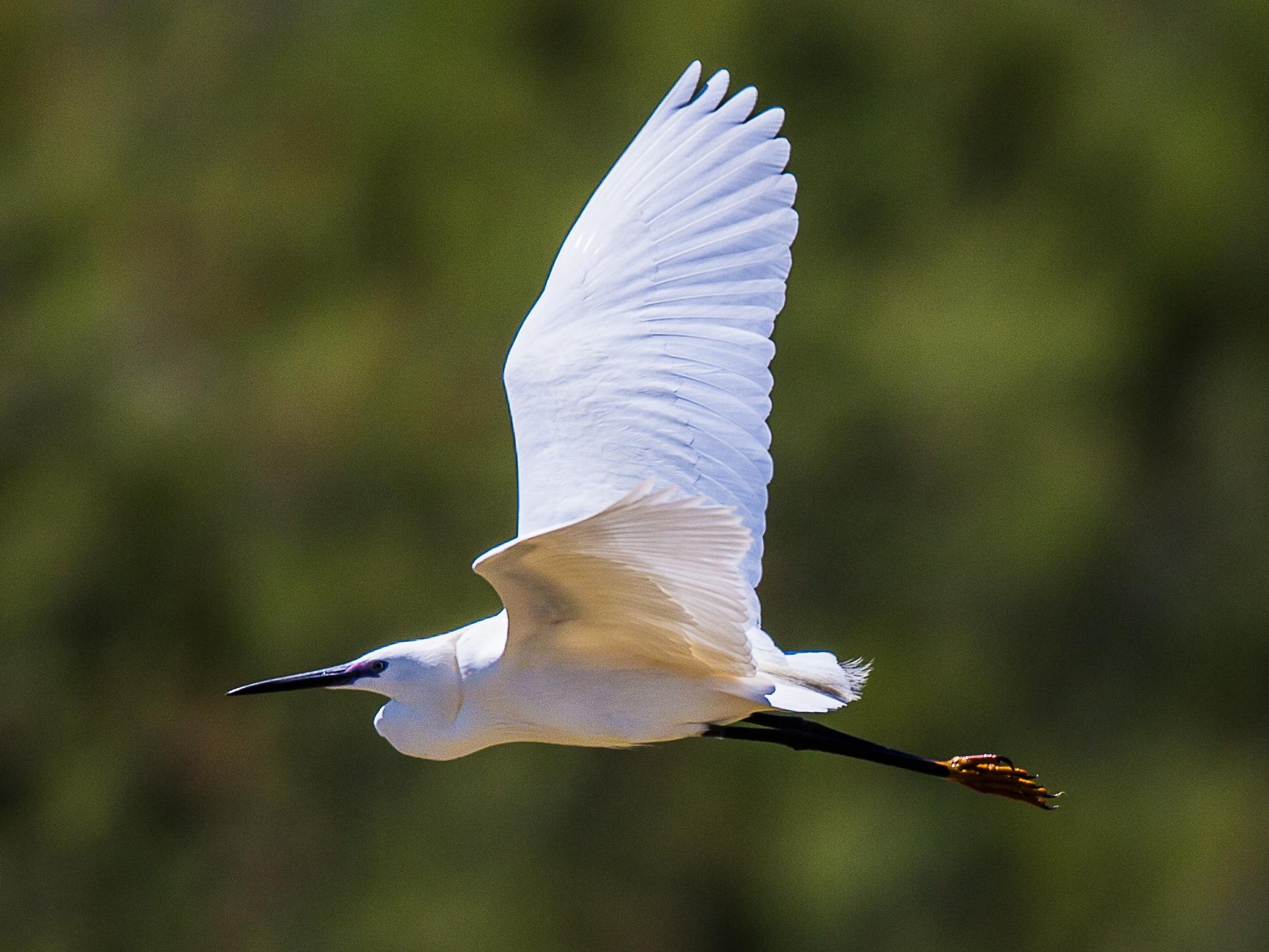 The flight of the Eggonet...