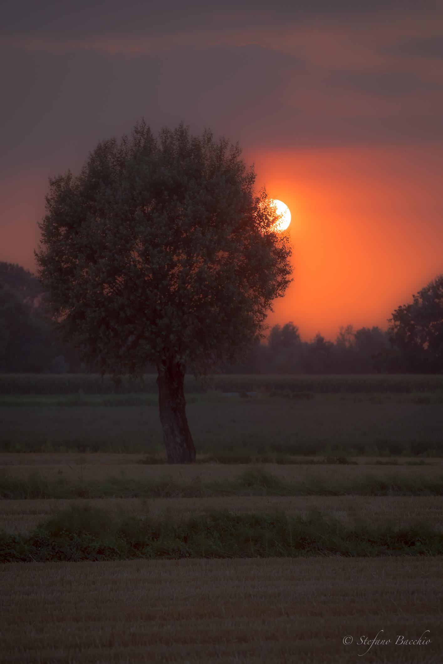 Dream of A Midsummer evening...