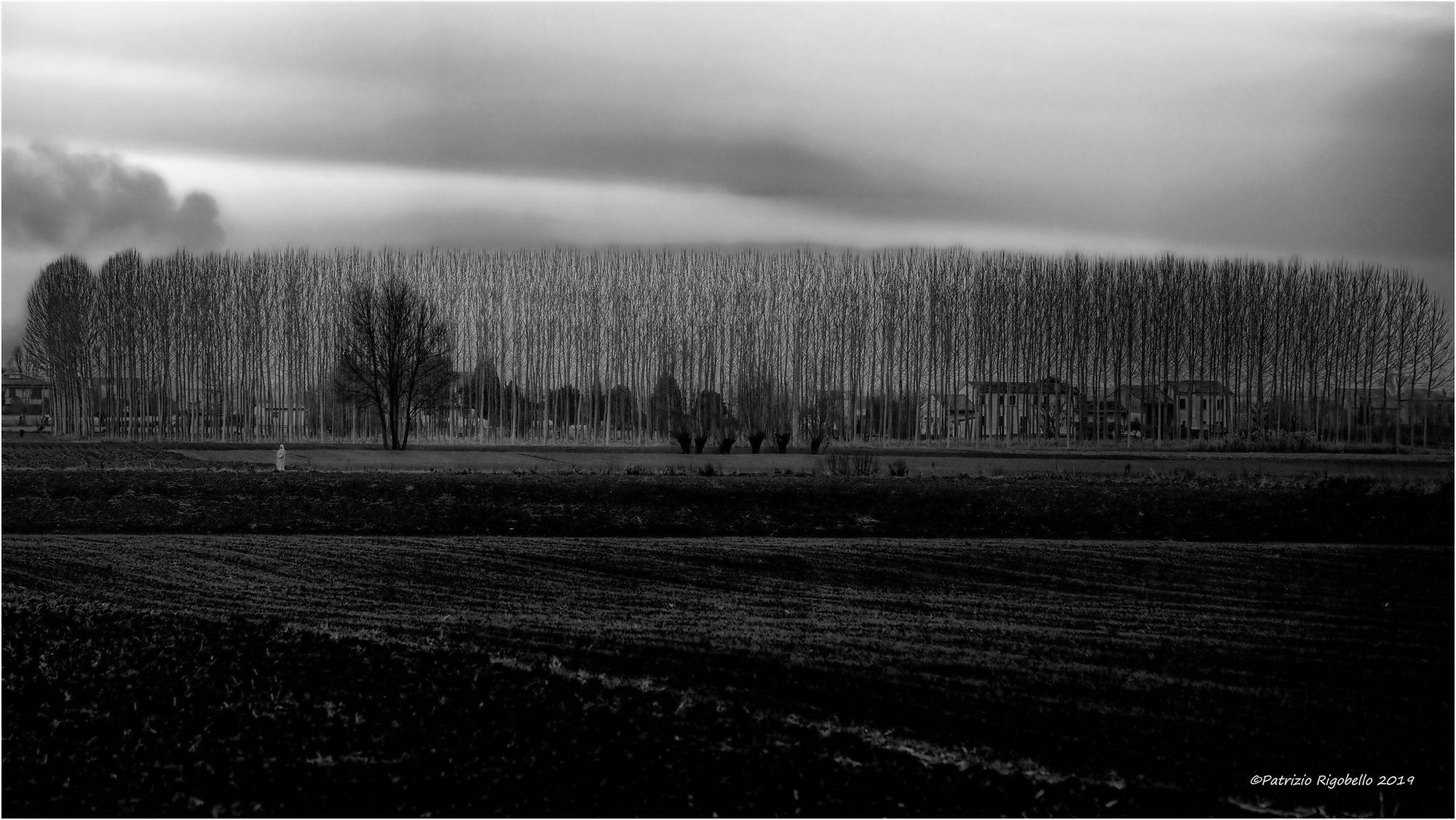 Plain Winter...