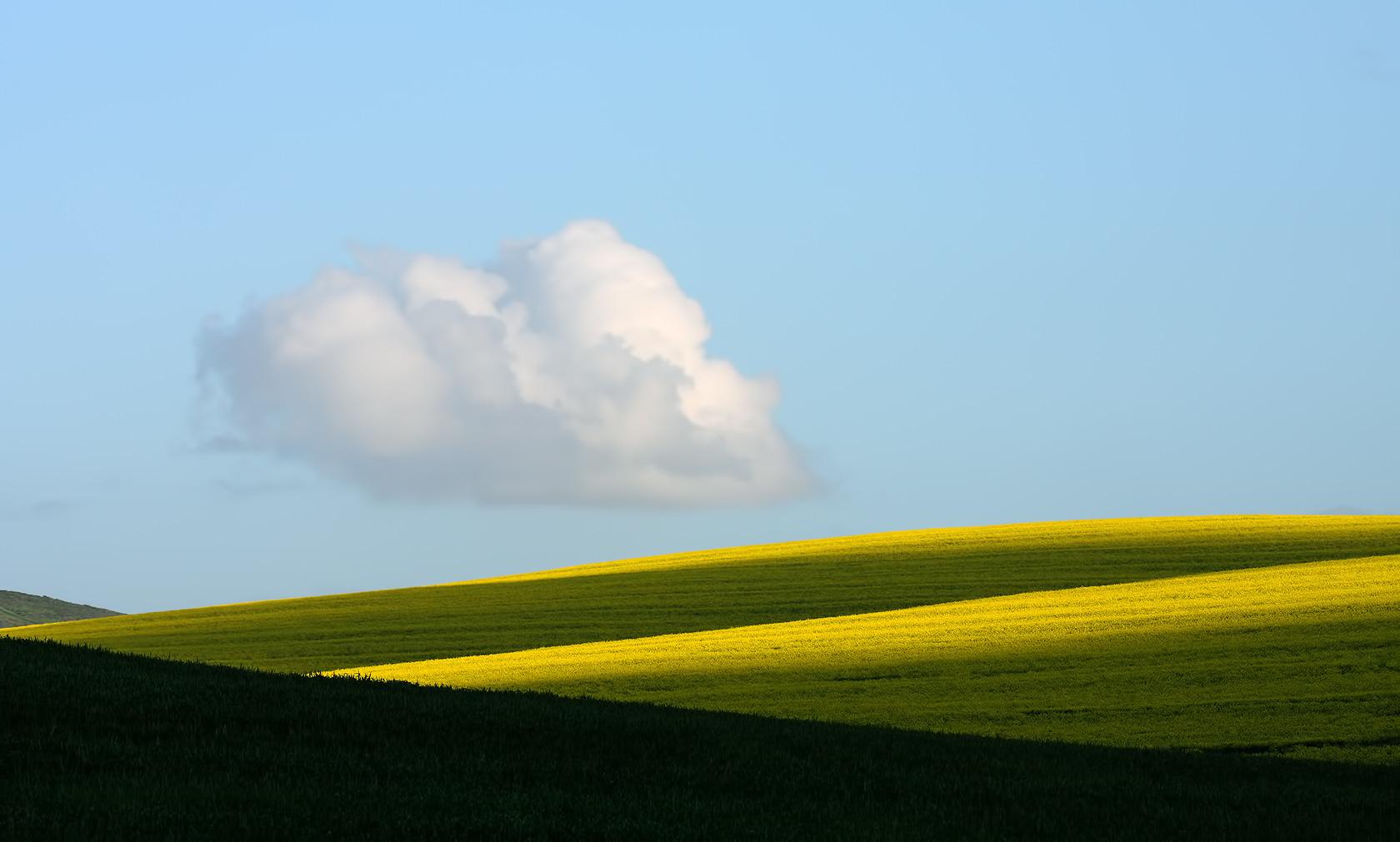 Canola and cloud...