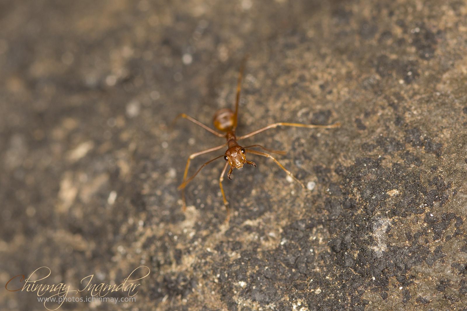 Una formica...