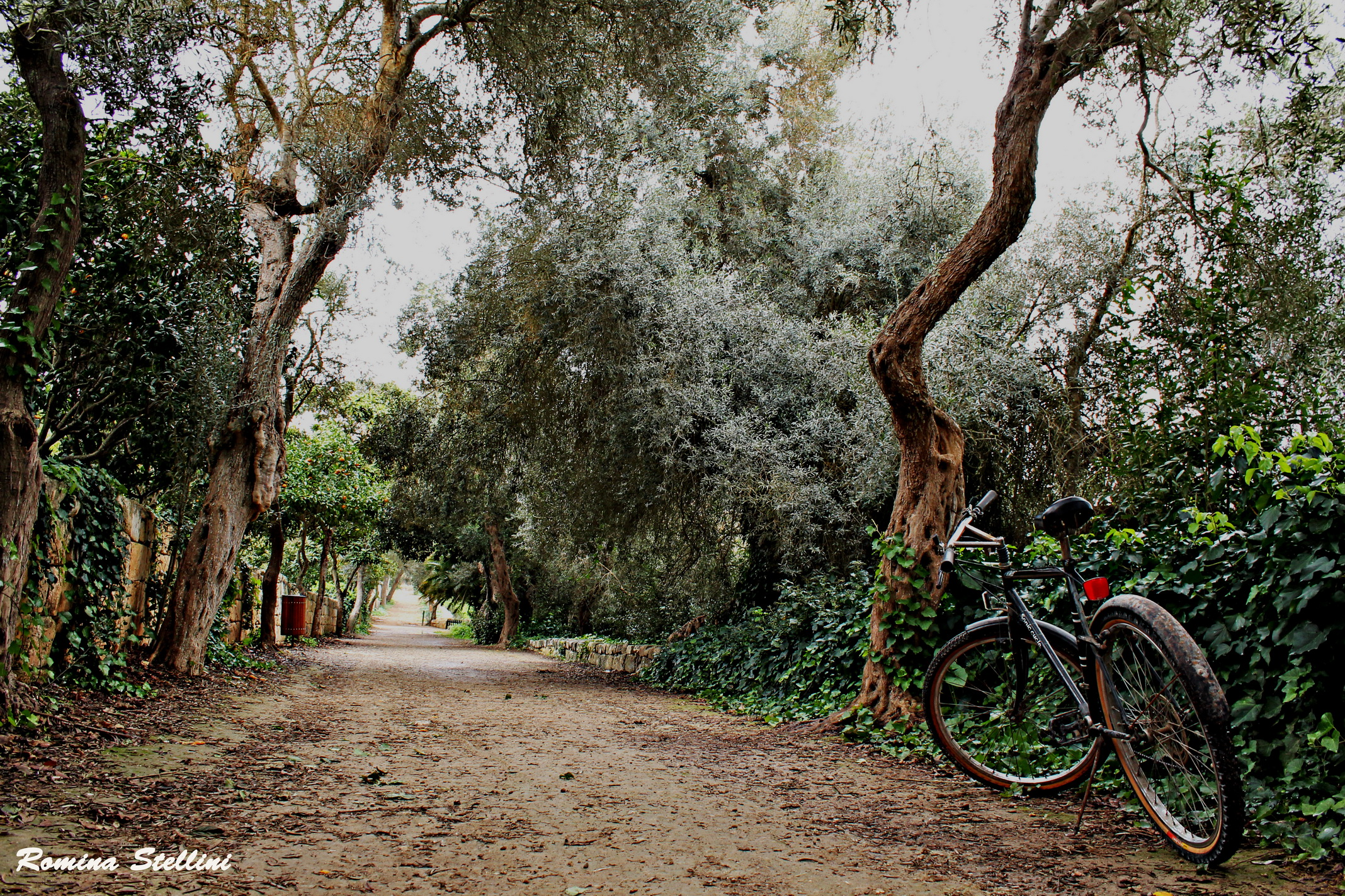 Buskett Gardens, Malta...