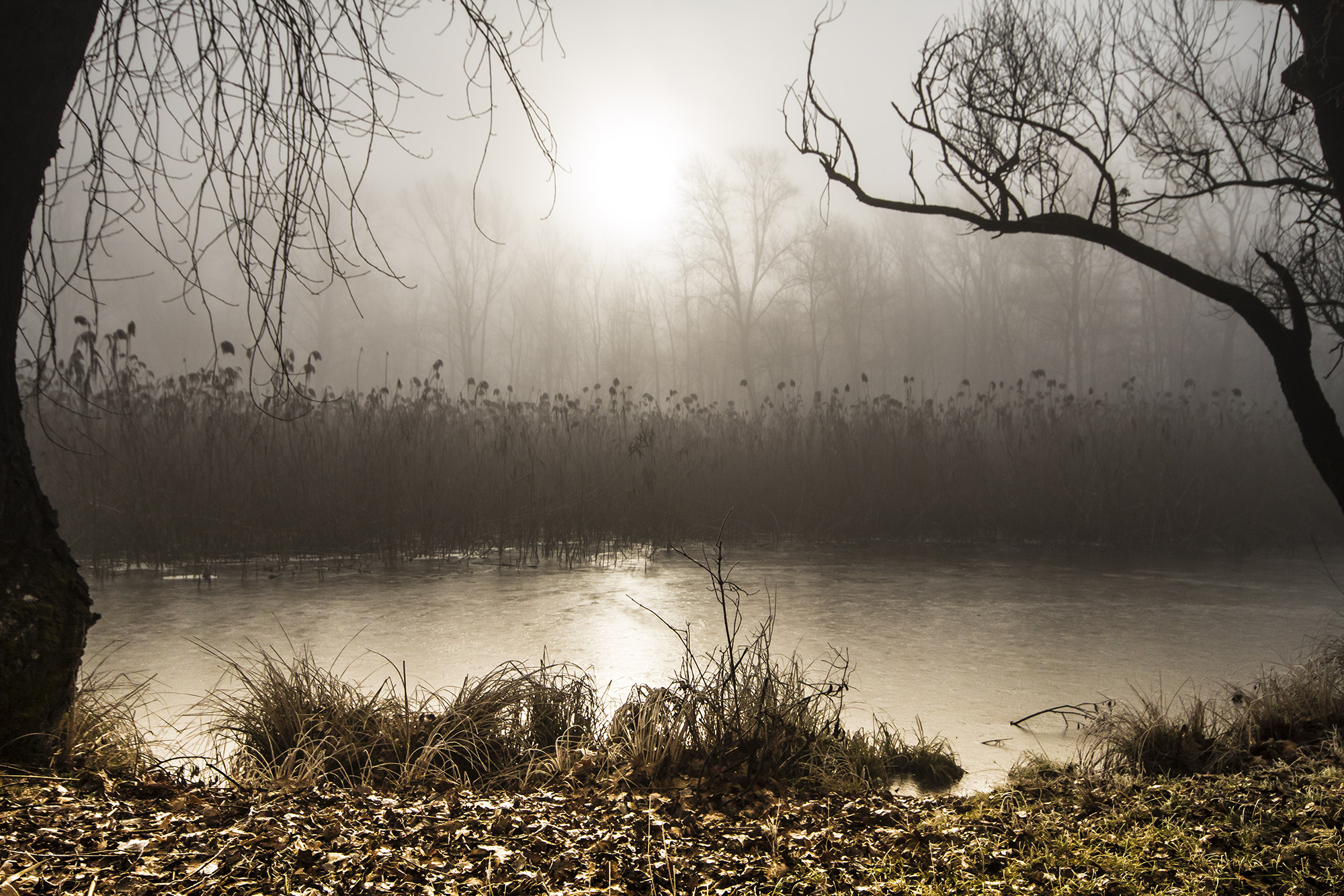 A cold winter morning .......