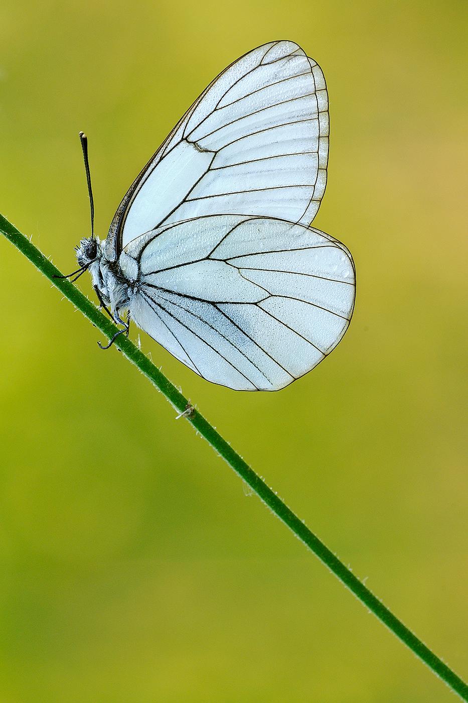 transparent elegance...