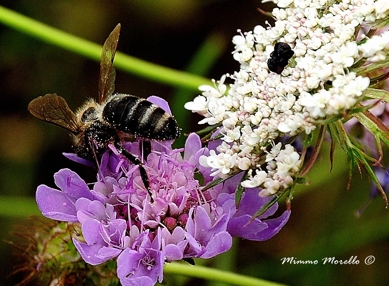 Piena di polline......