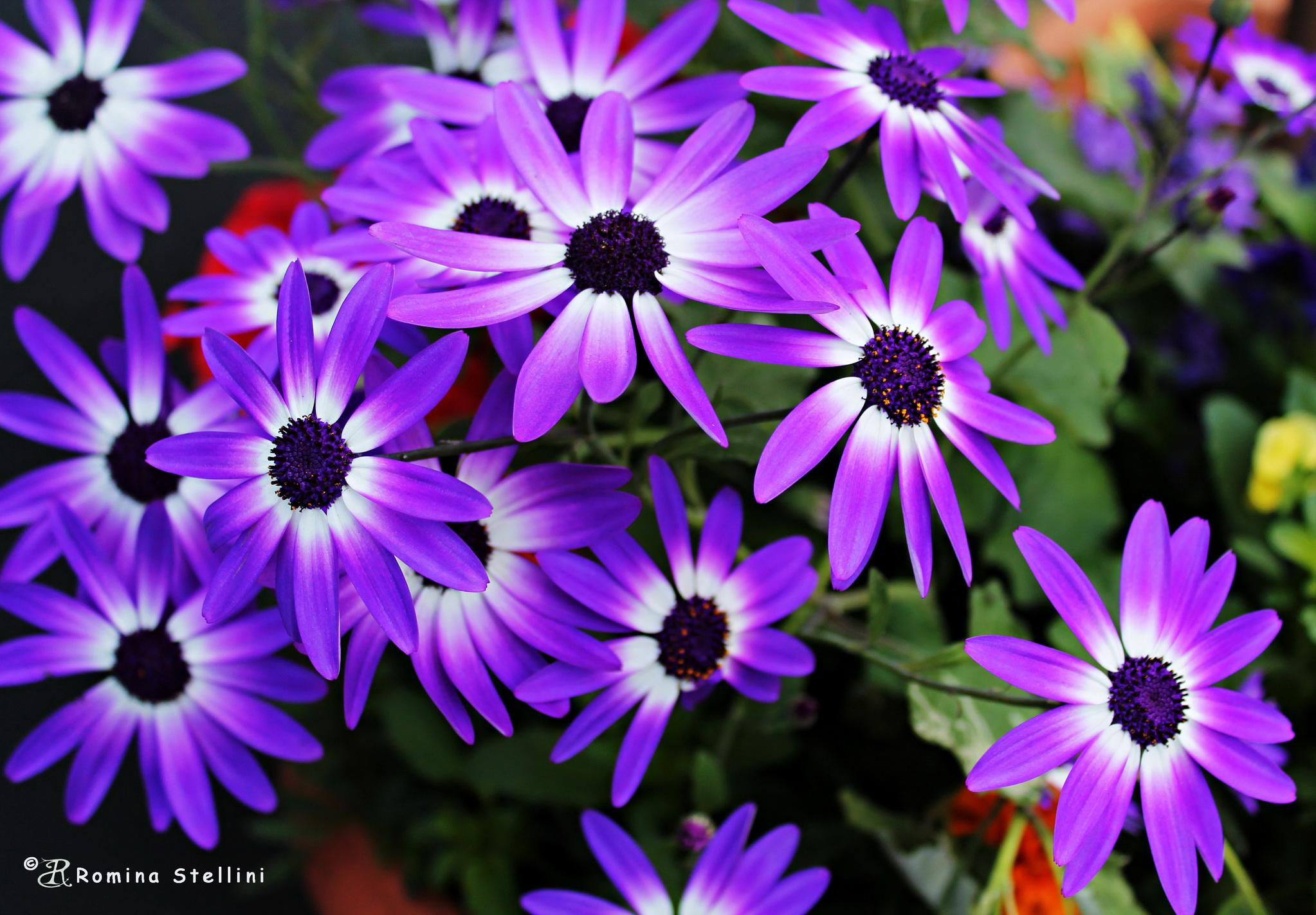 Flower Garden, Plymouth / England...
