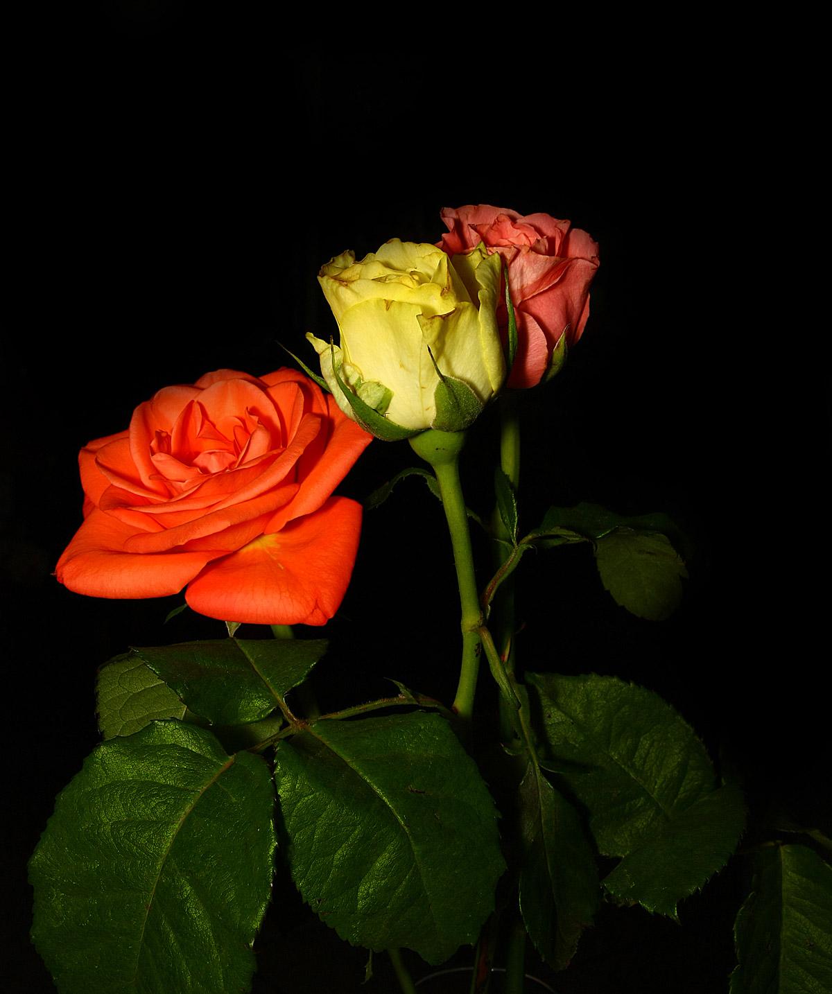 3 roses...