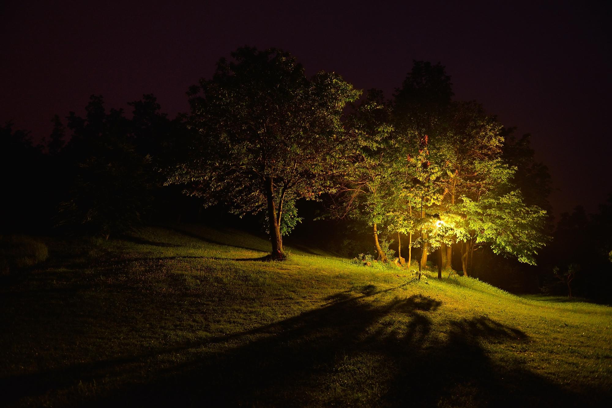 C'è una luce nel bosco.......