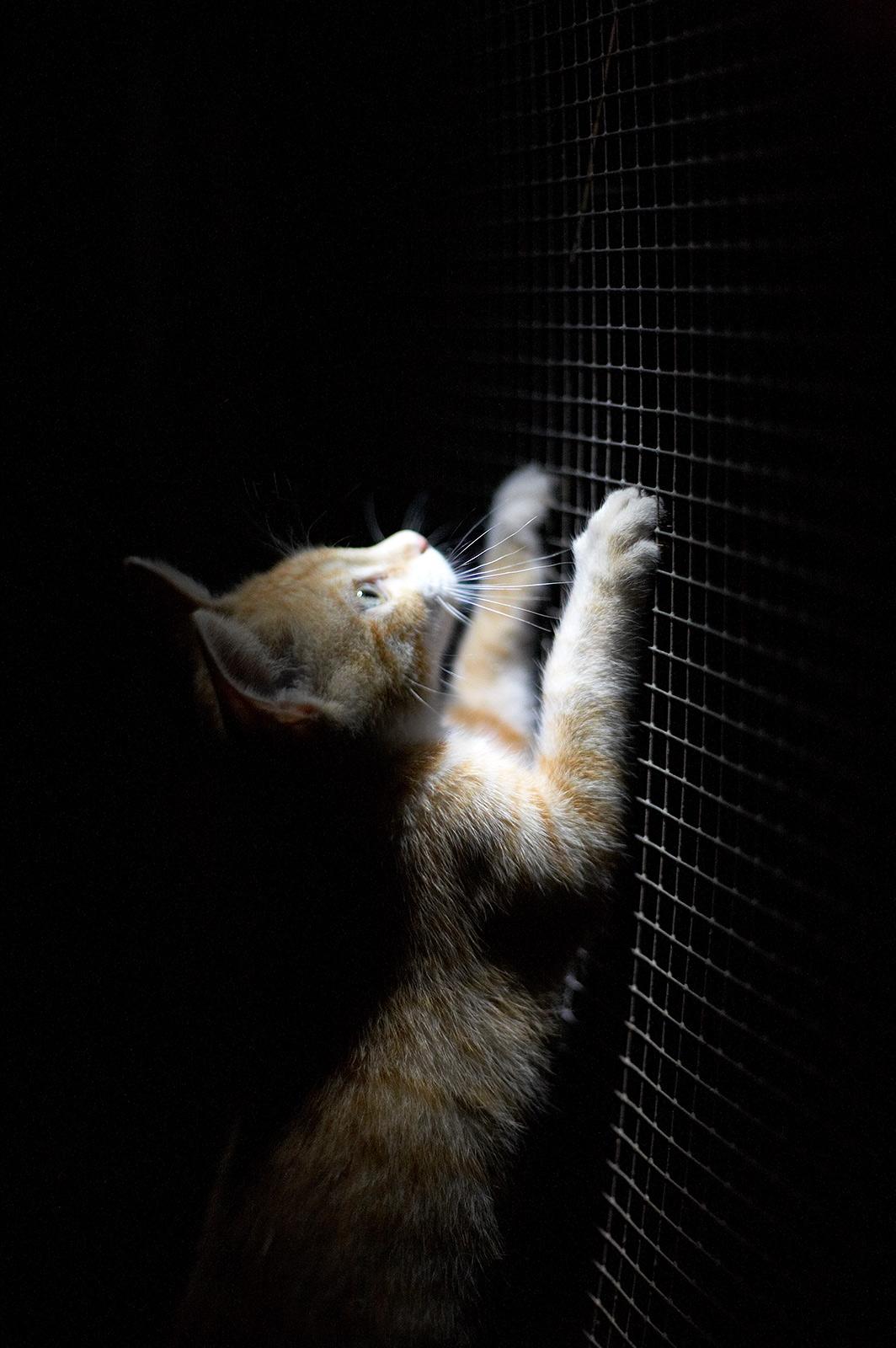 Sutica in the night...