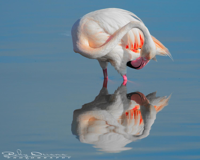 Specchio.. specchio delle mie brame......