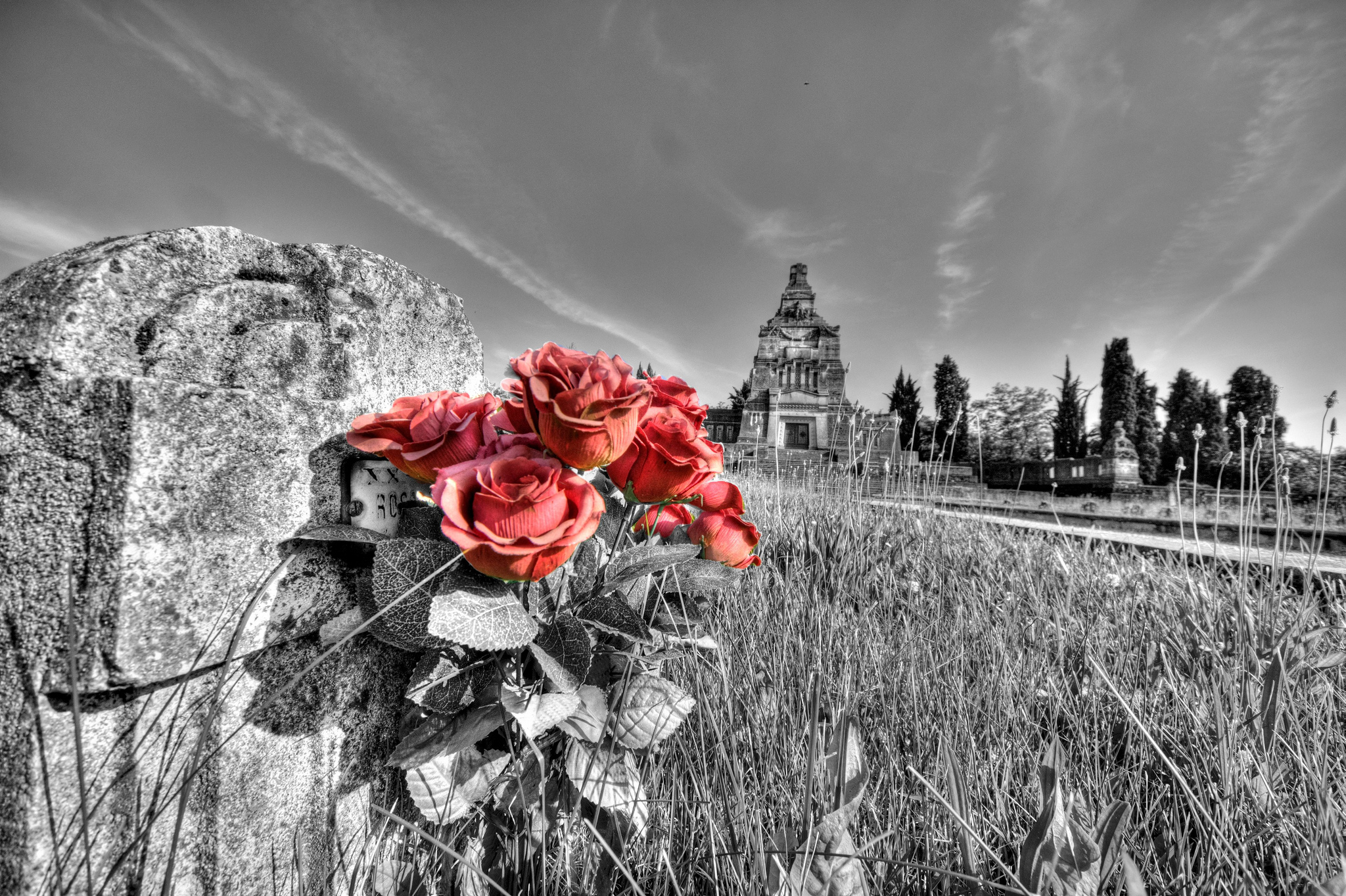 Red roses in the cemetery Crespi...