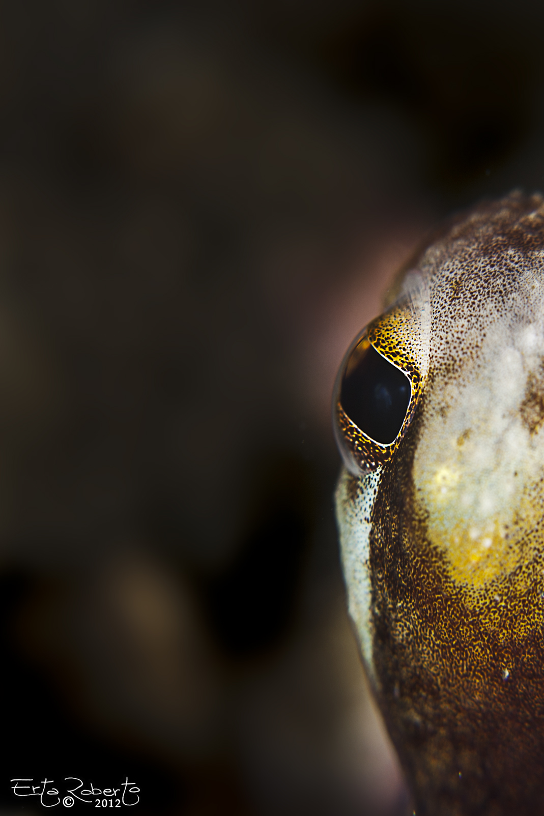 Curious octopus...