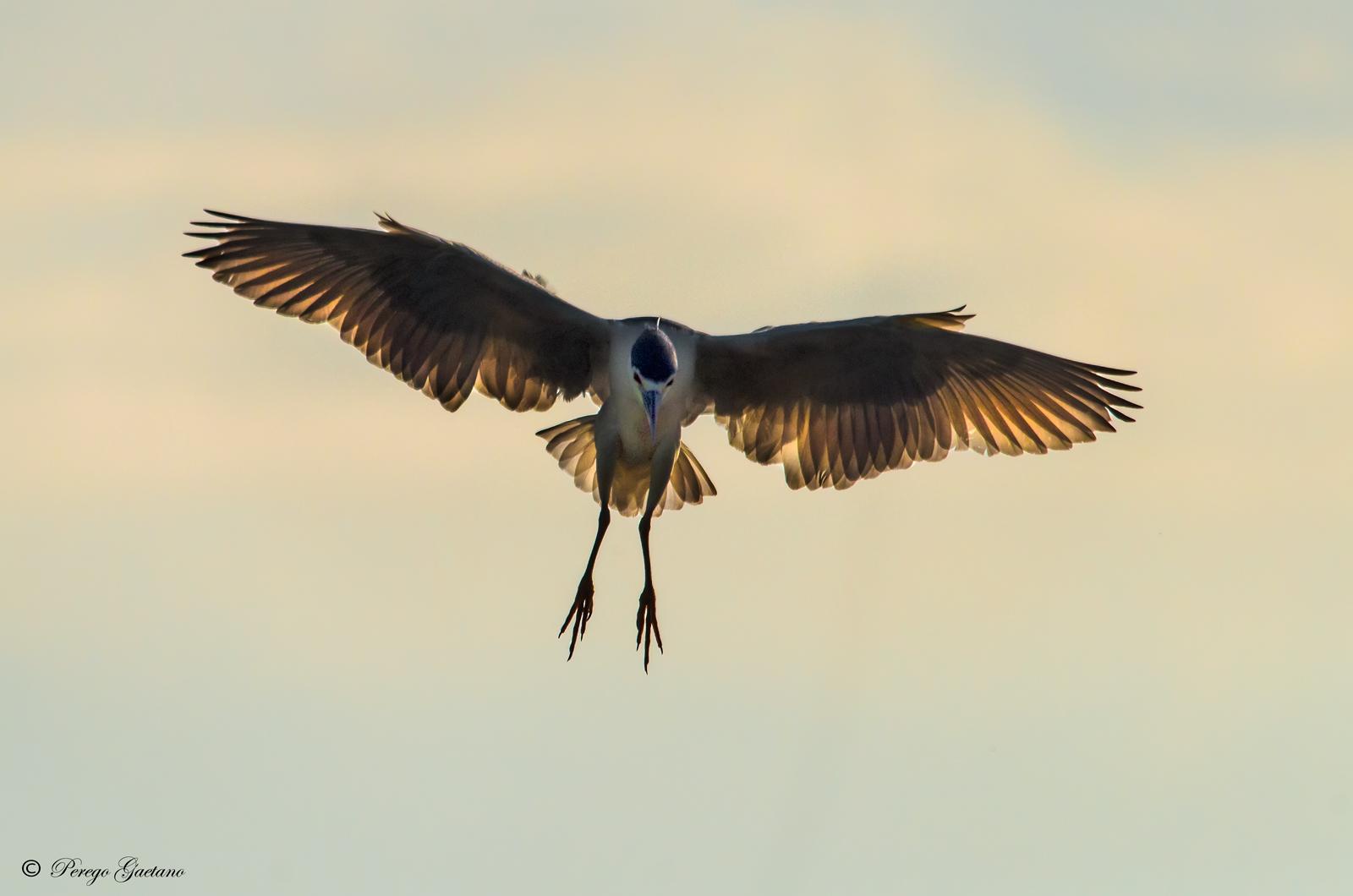 The landing...