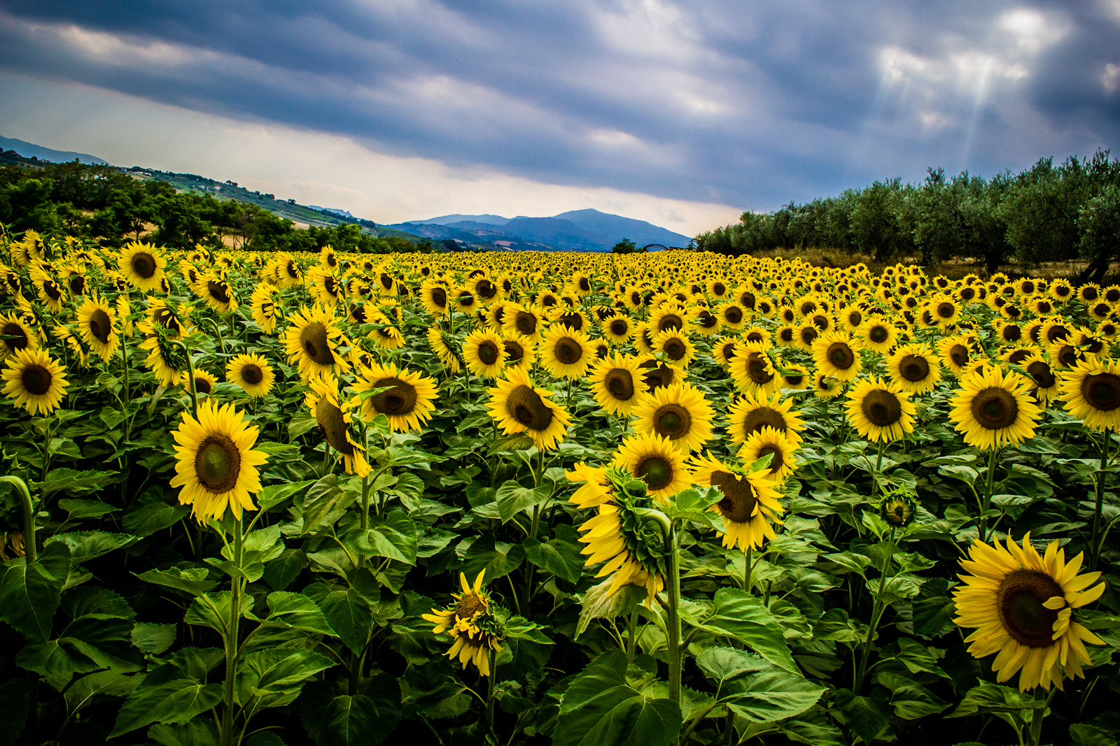 A Thousand Splendid Suns...