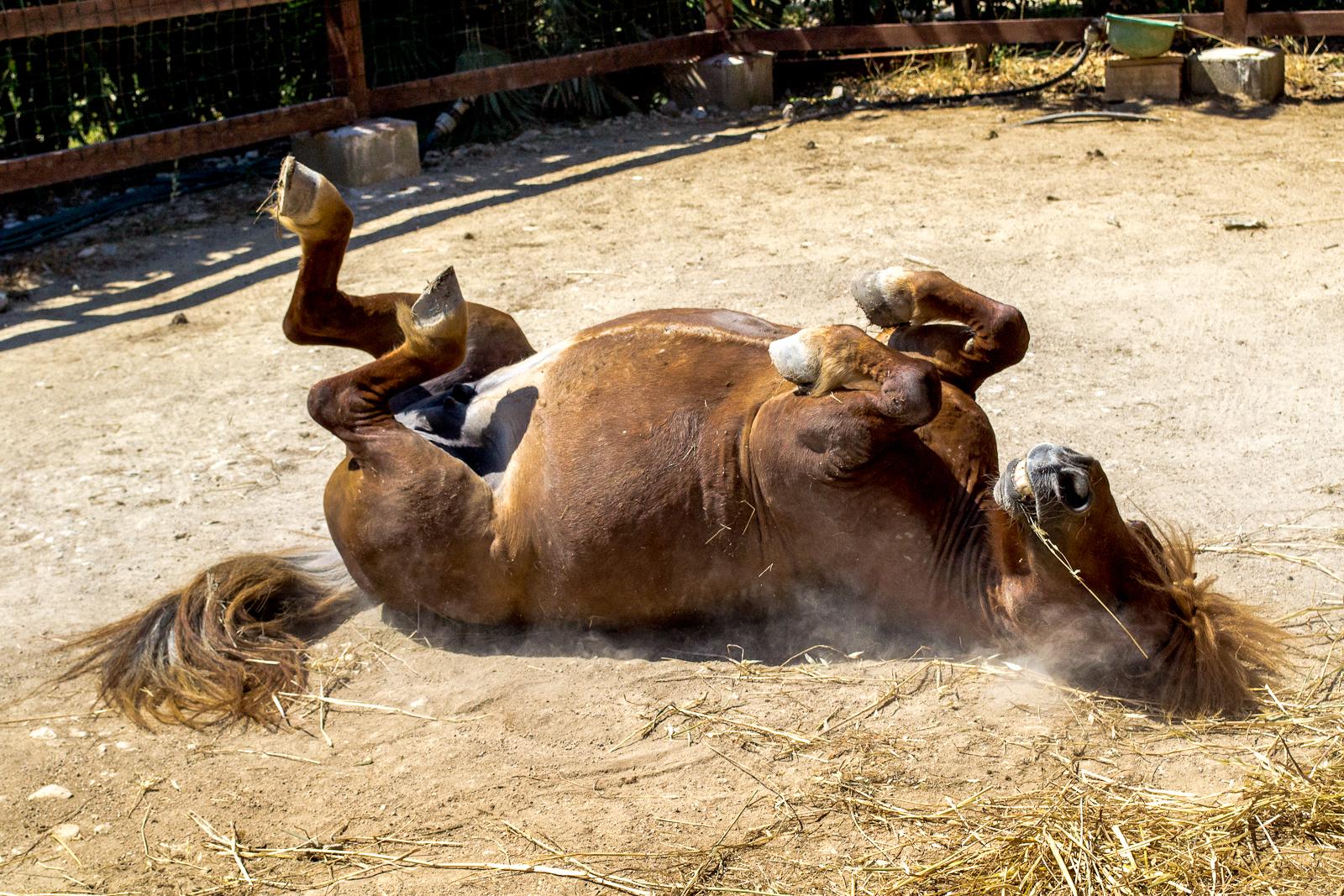 The pony play ......