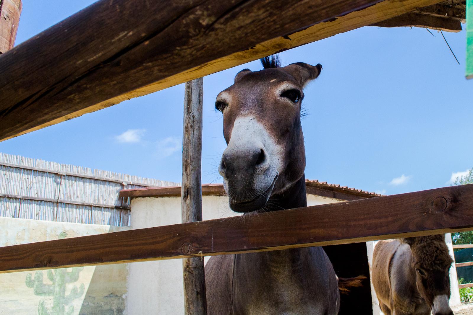 Donkey ......