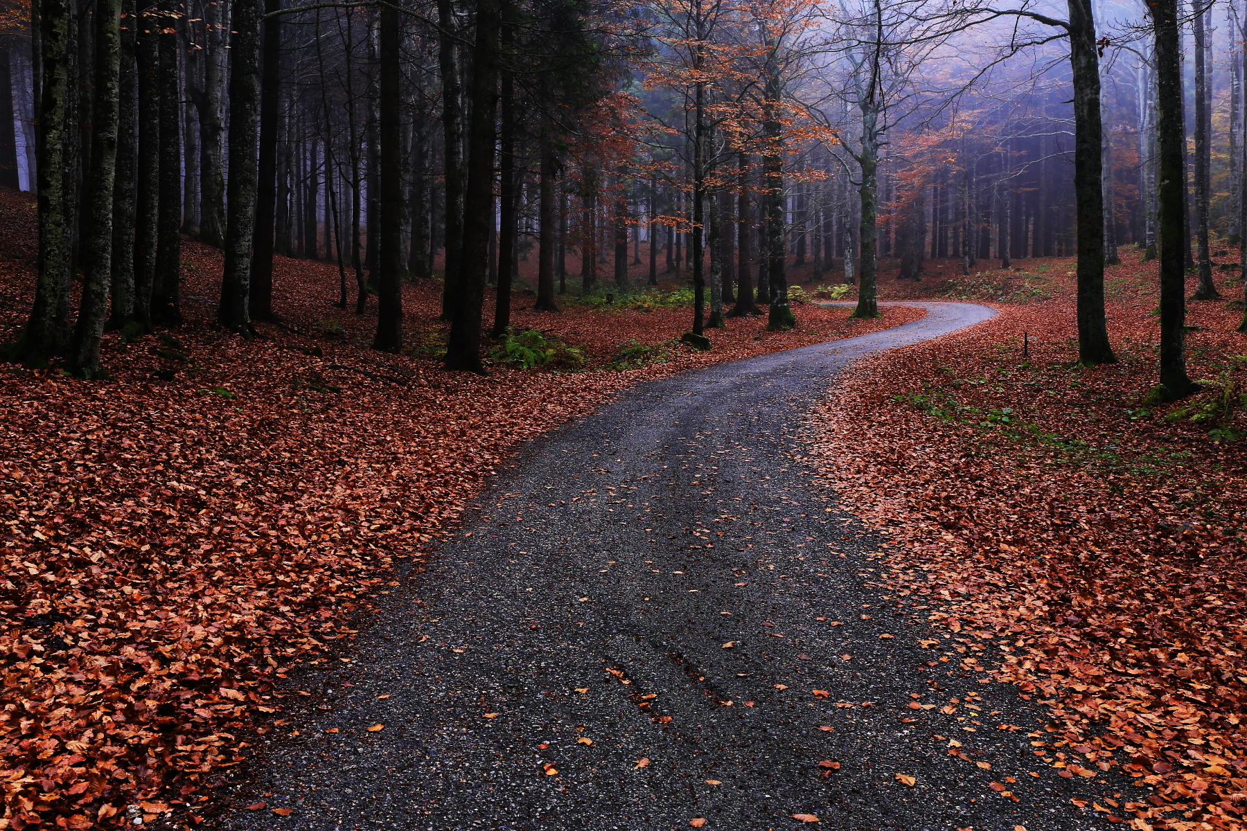 The road in the forest...