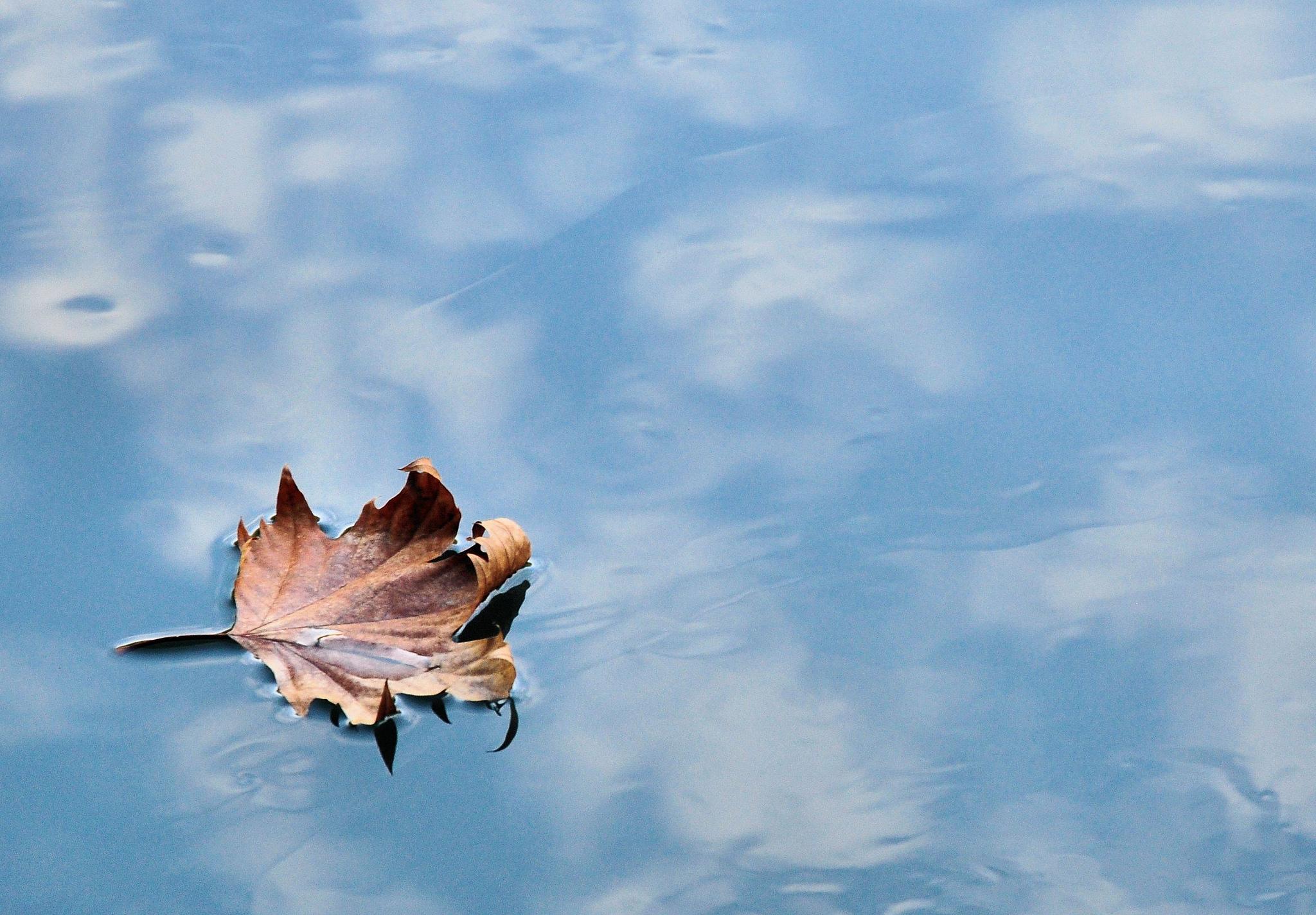 Death Leaf...