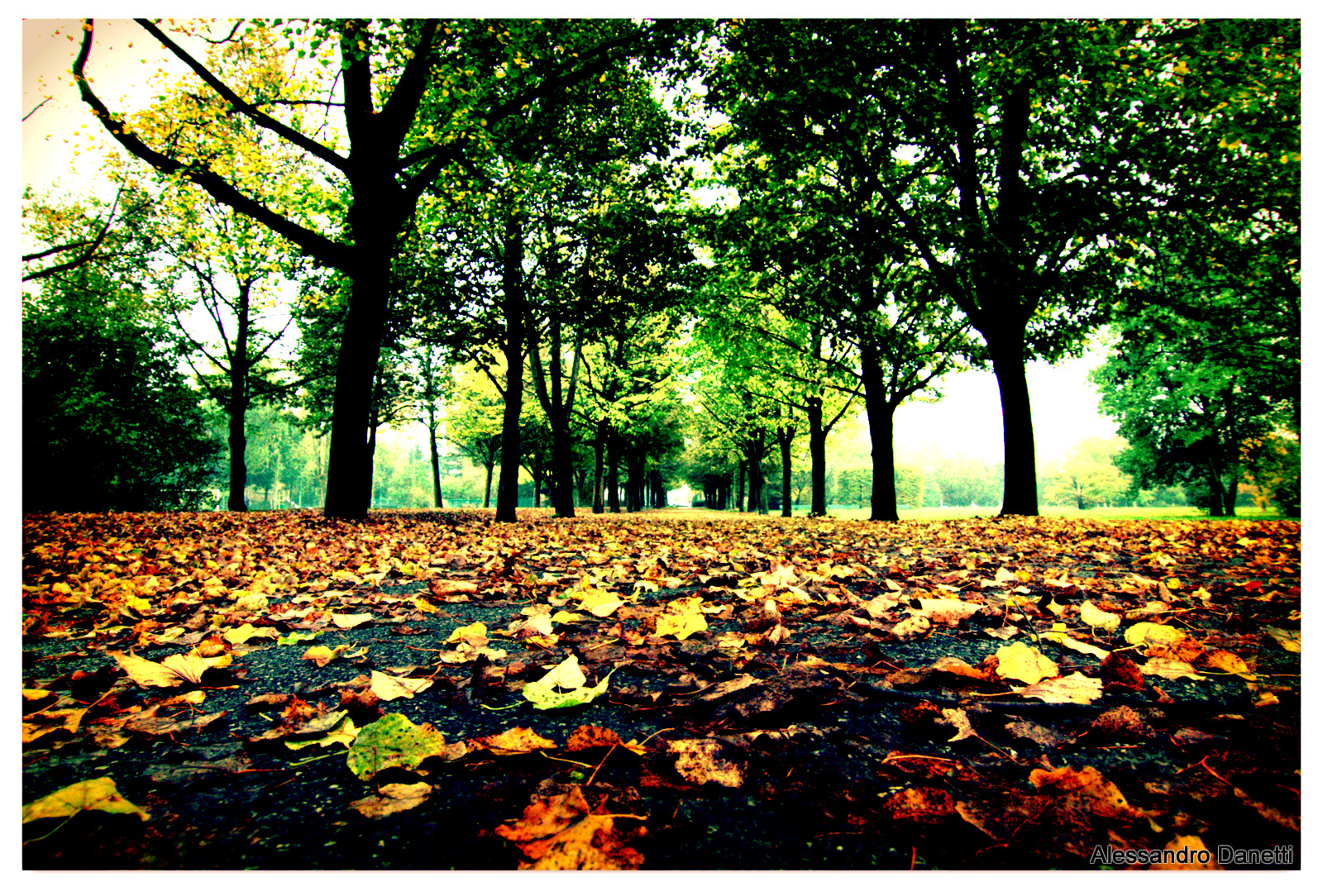 The Autumn falls on parks in Milan...