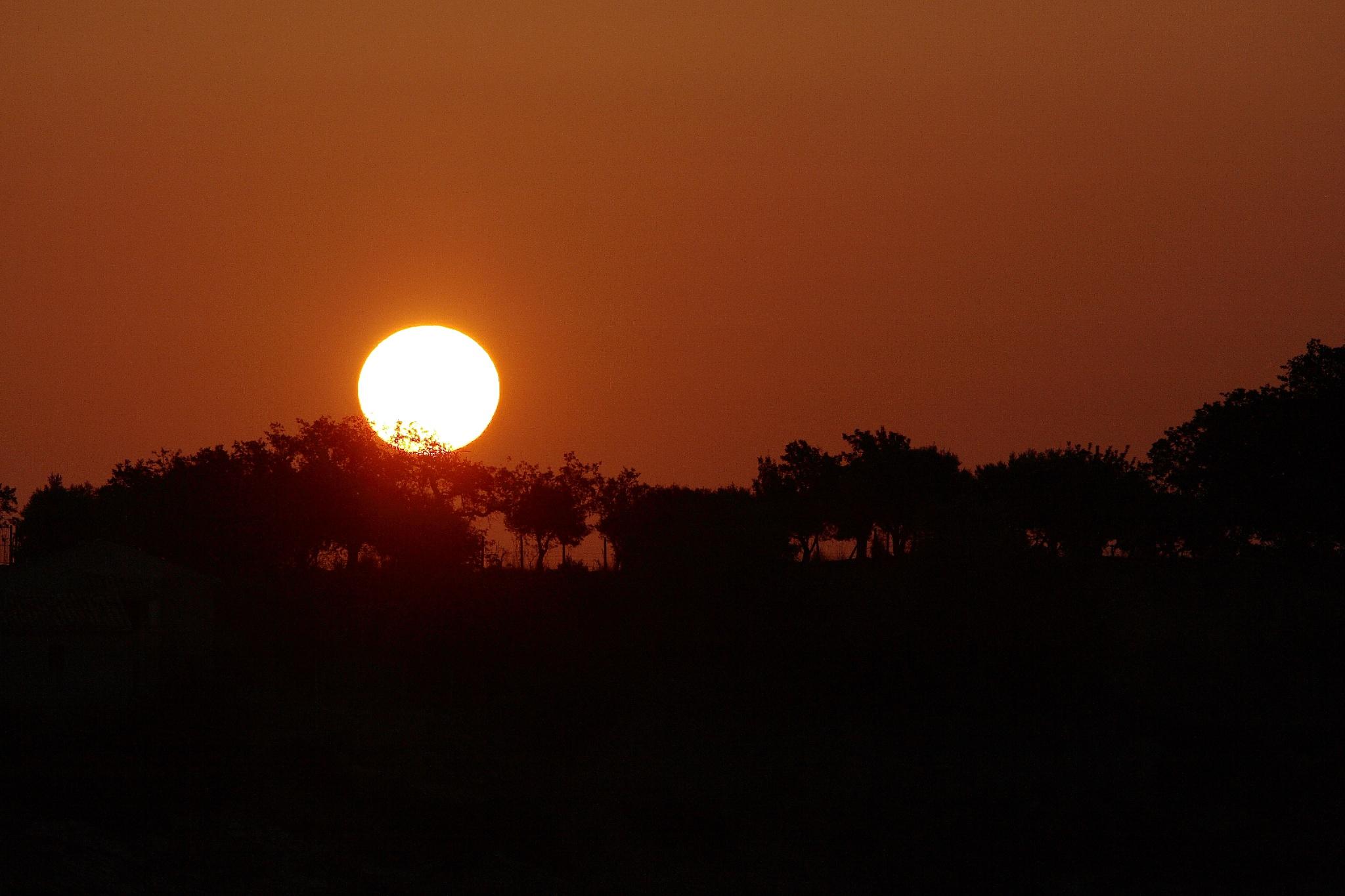 Sunrise among the olive trees...