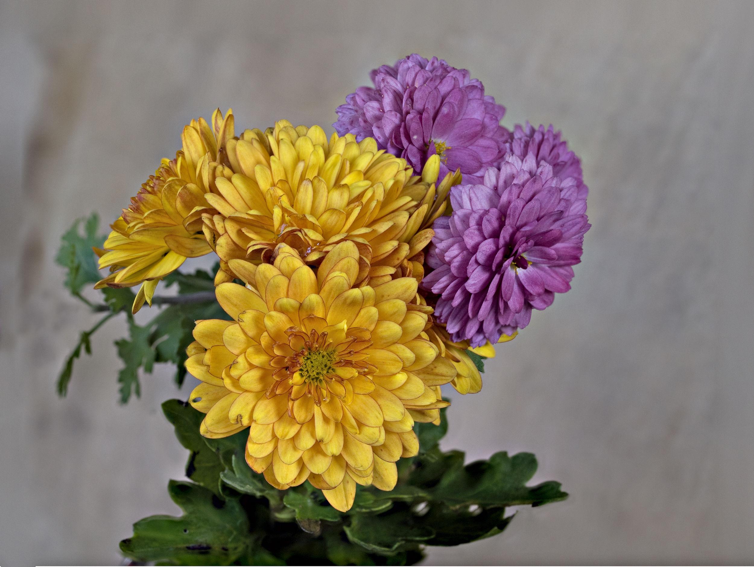 Fiori autunnali juzaphoto for Immagini fiori autunnali