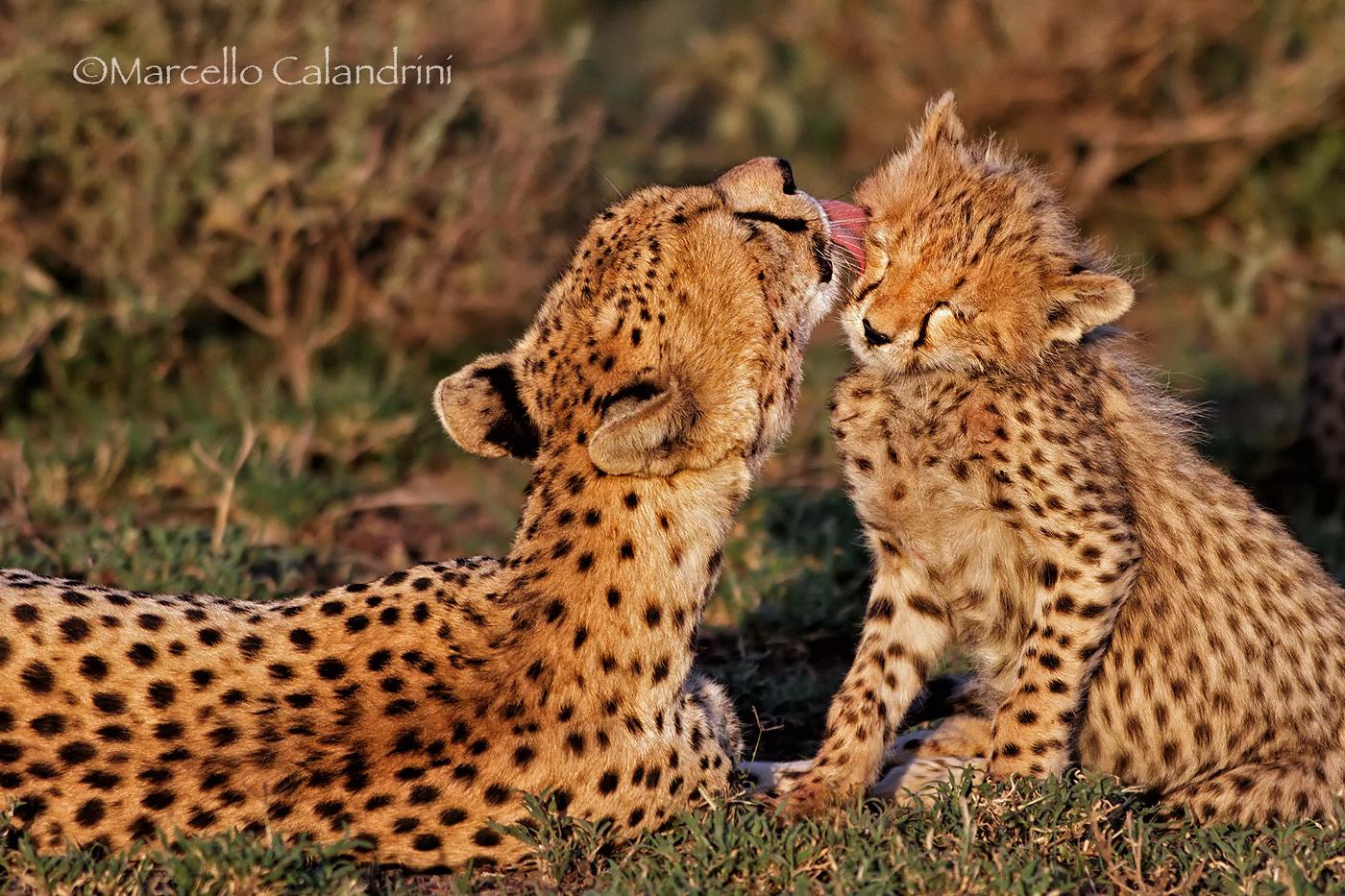 Tenderness...