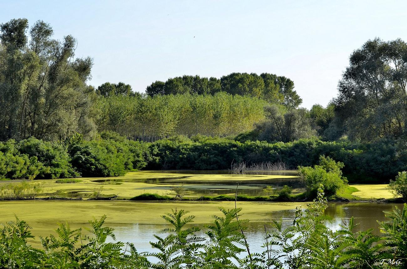 Laguna Green .........