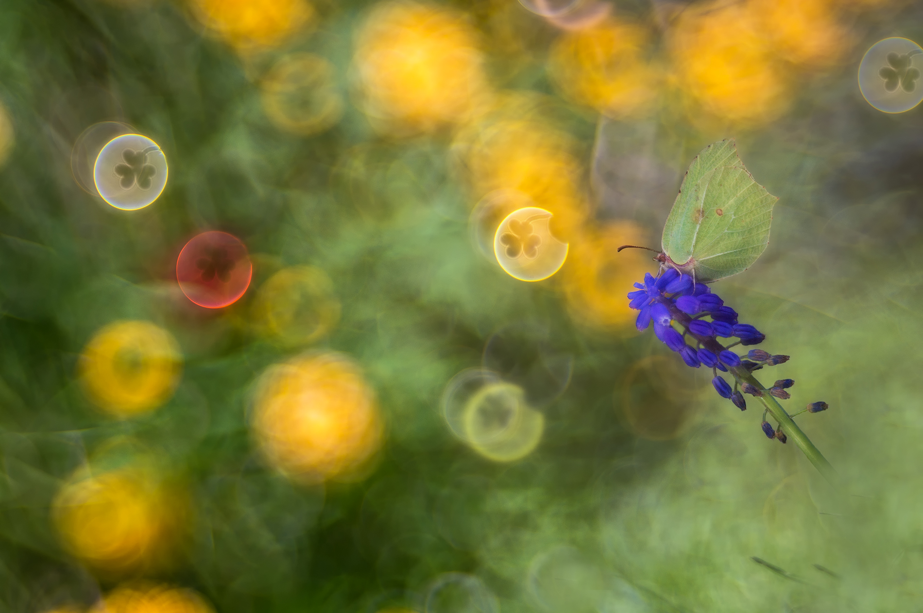 the clover - macro flare painting...