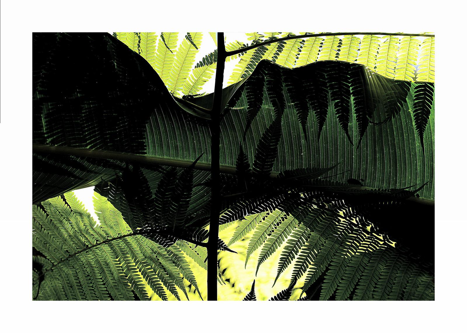 In the Selva...