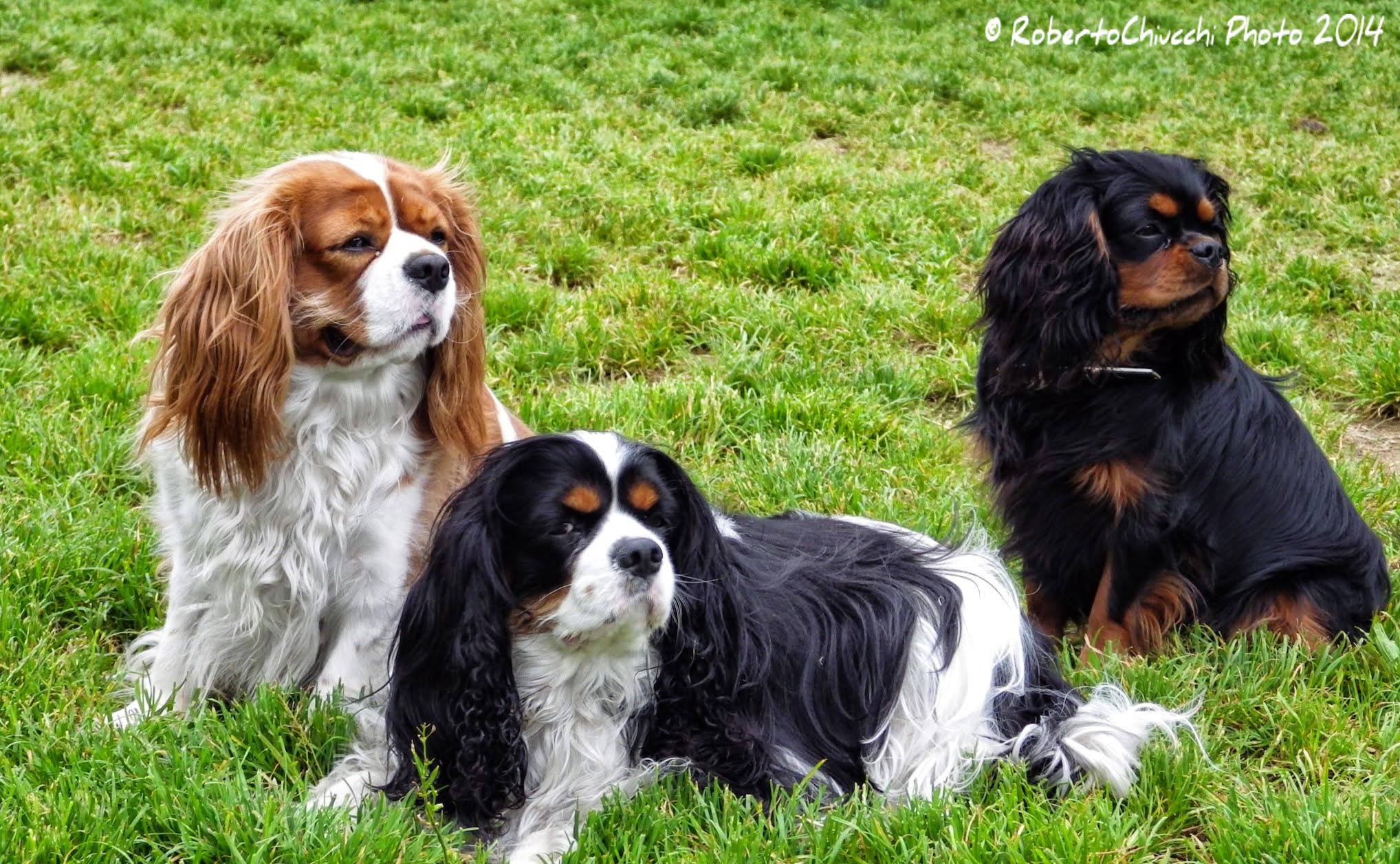 Three Kings...