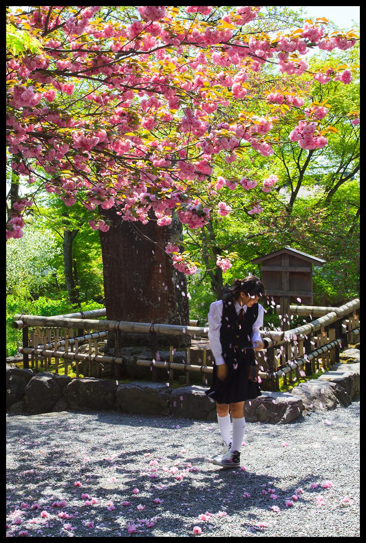 Cherry Blossom Girl...