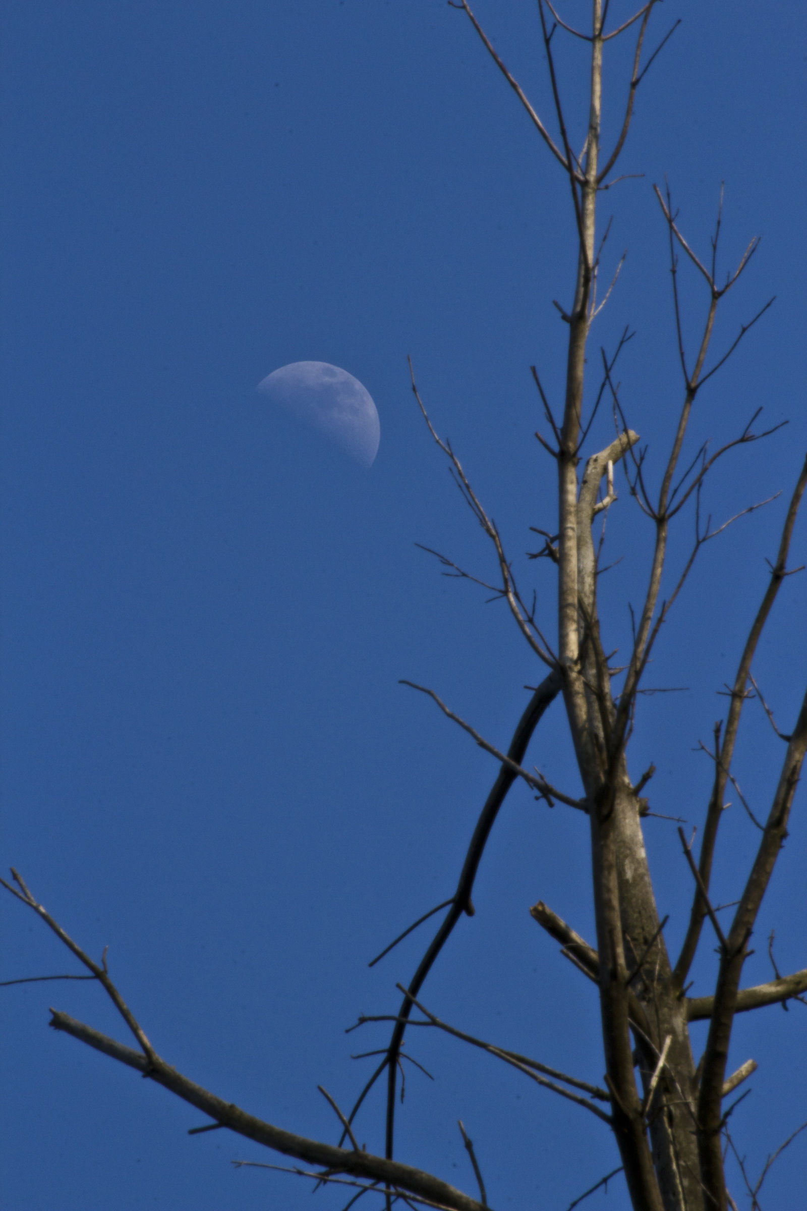 Moon and albero2...