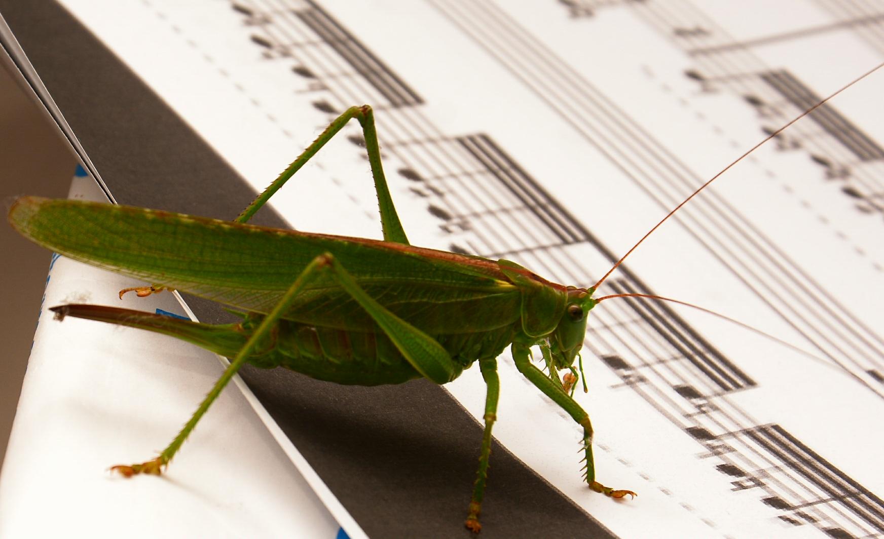 e un giorno dirigerò l'orchestra......
