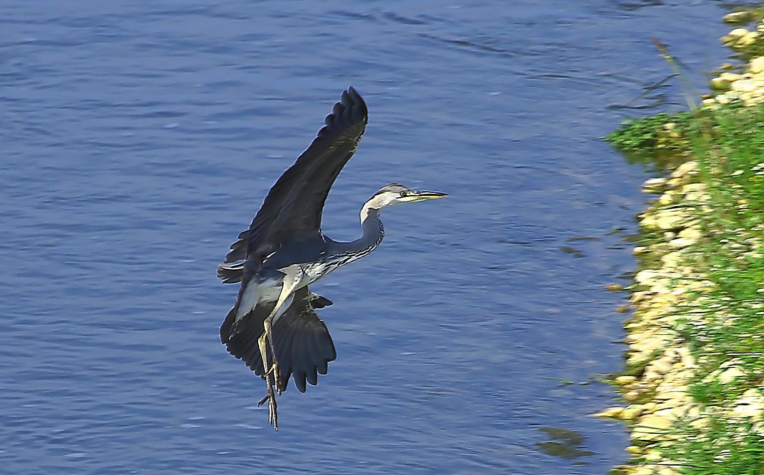 heron landing maneuver in...